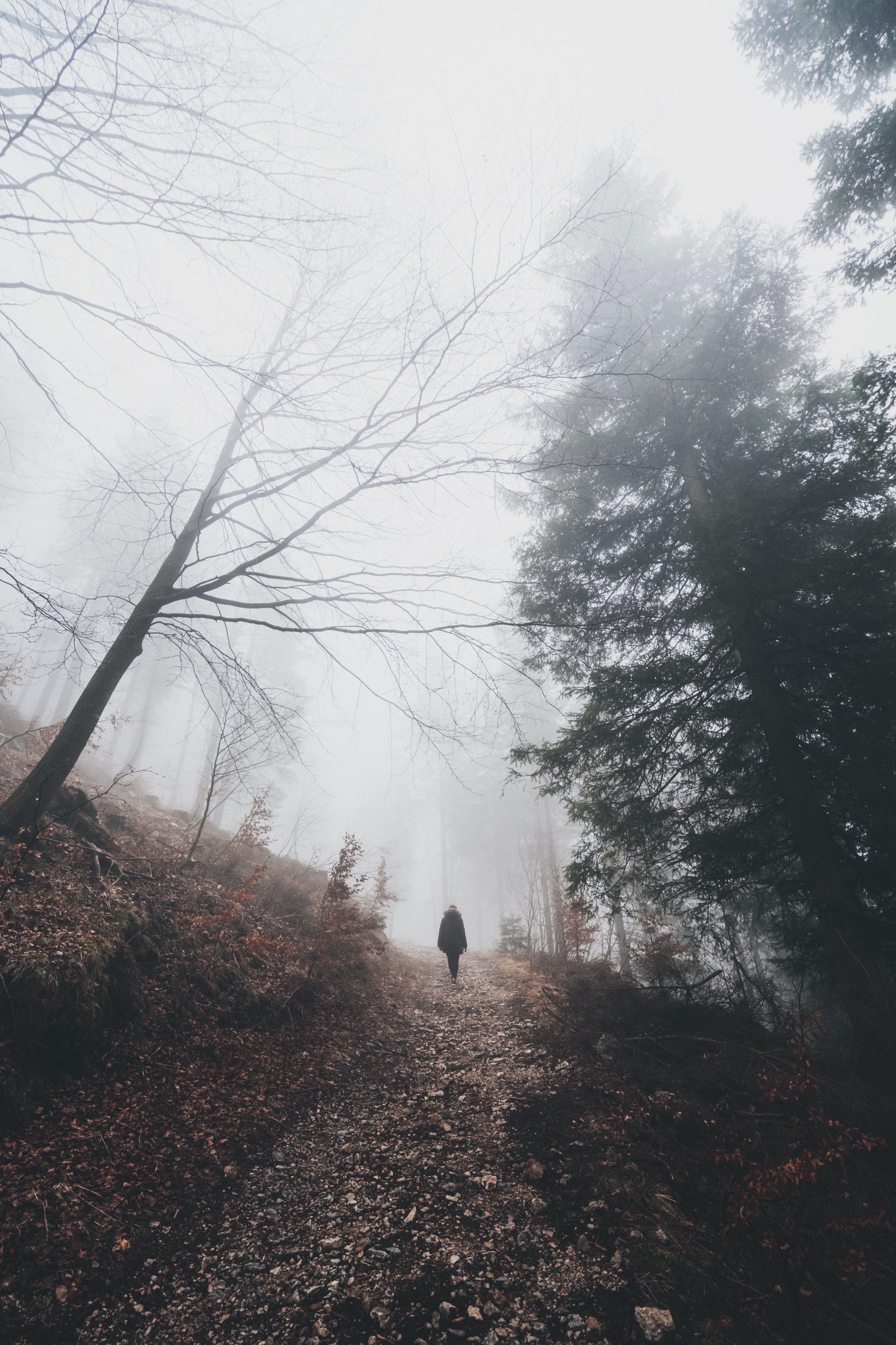 A person walking on a rocky path in a sparse forest on a foggy day