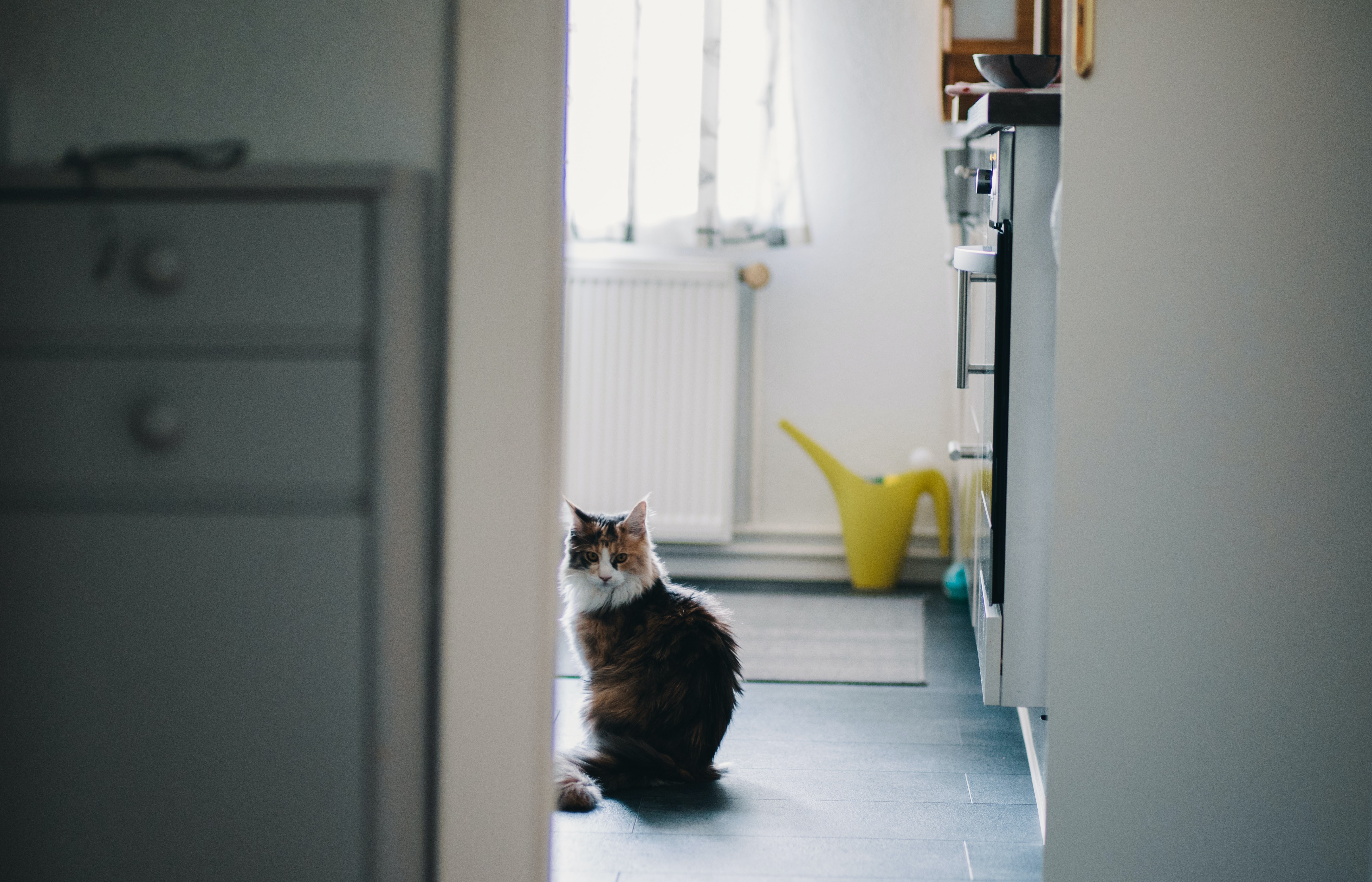 Cat through doorway in Berlin home kitchen with yellow watering can in background