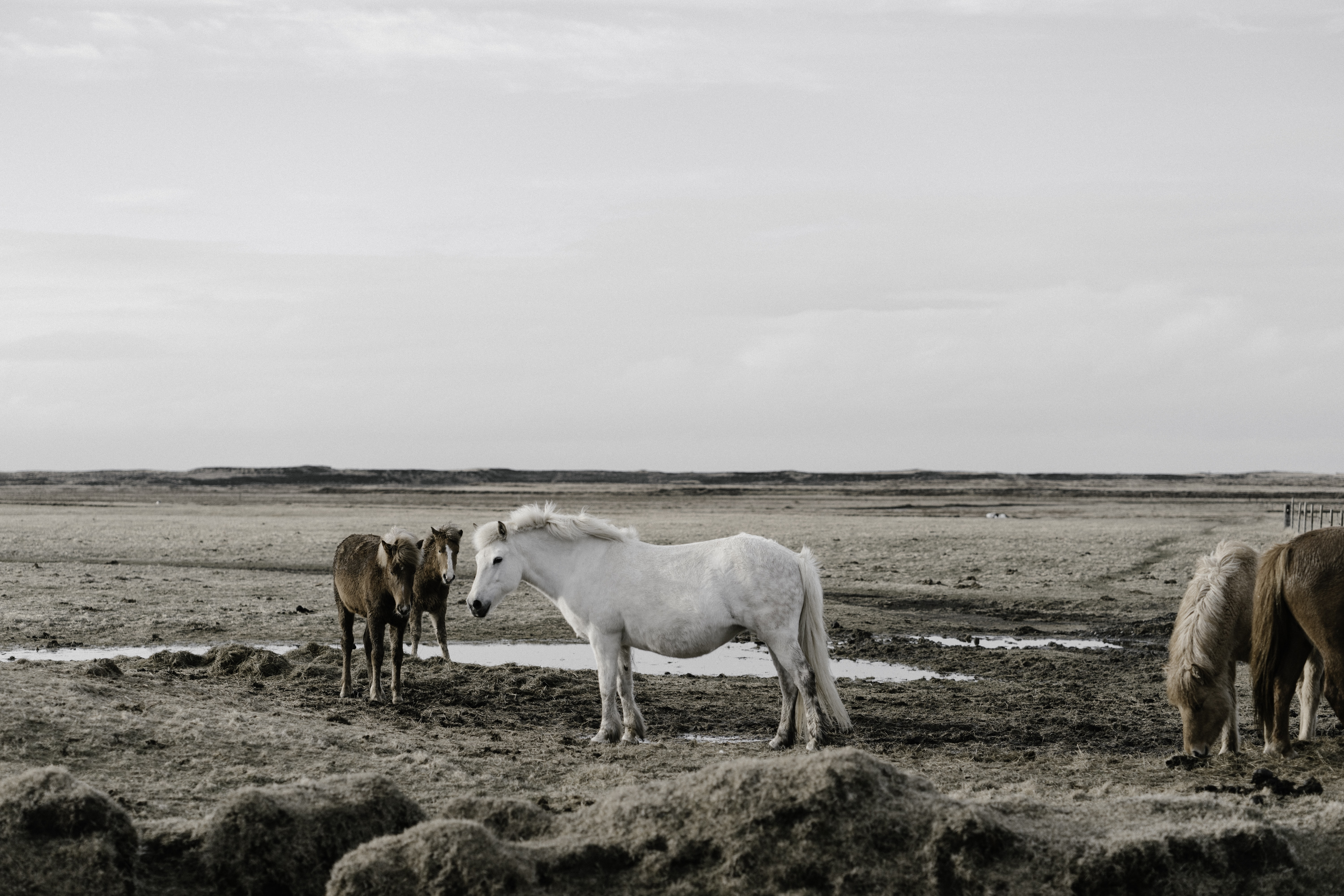 A group of ponies on a muddy plain under thick clouds