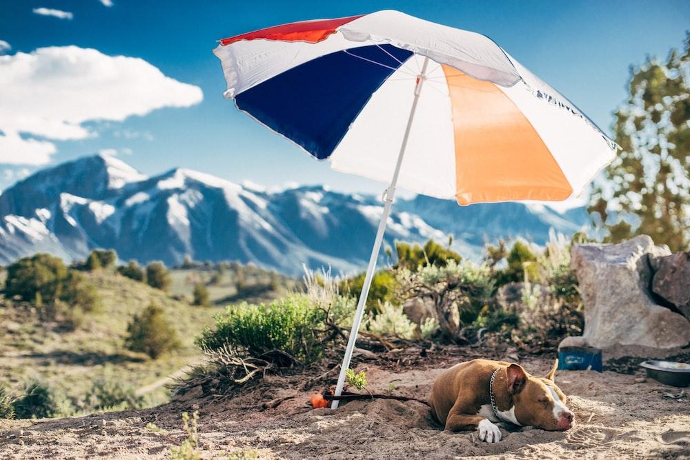 brown dog lying on gray sand