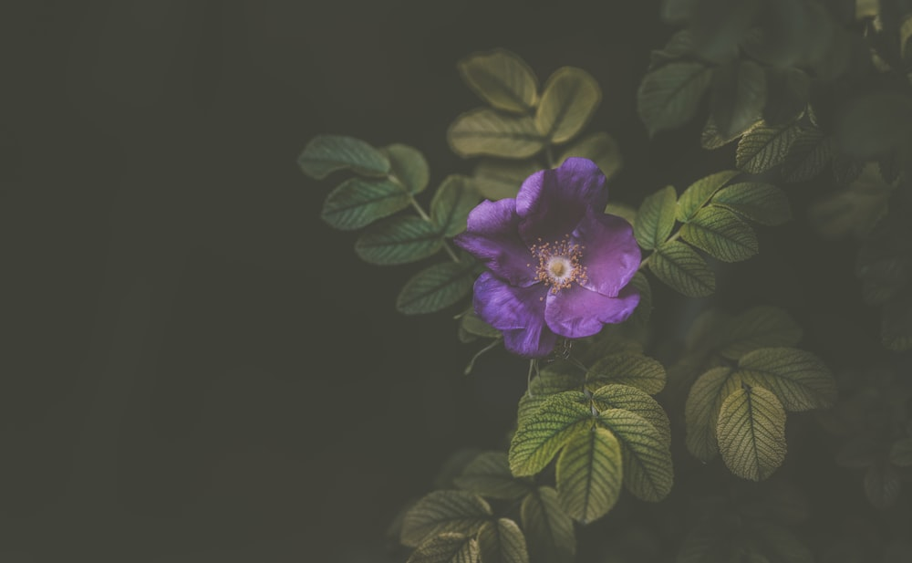focus photography purple petaled flower