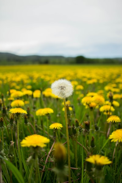 white and yellow flower field during daytime