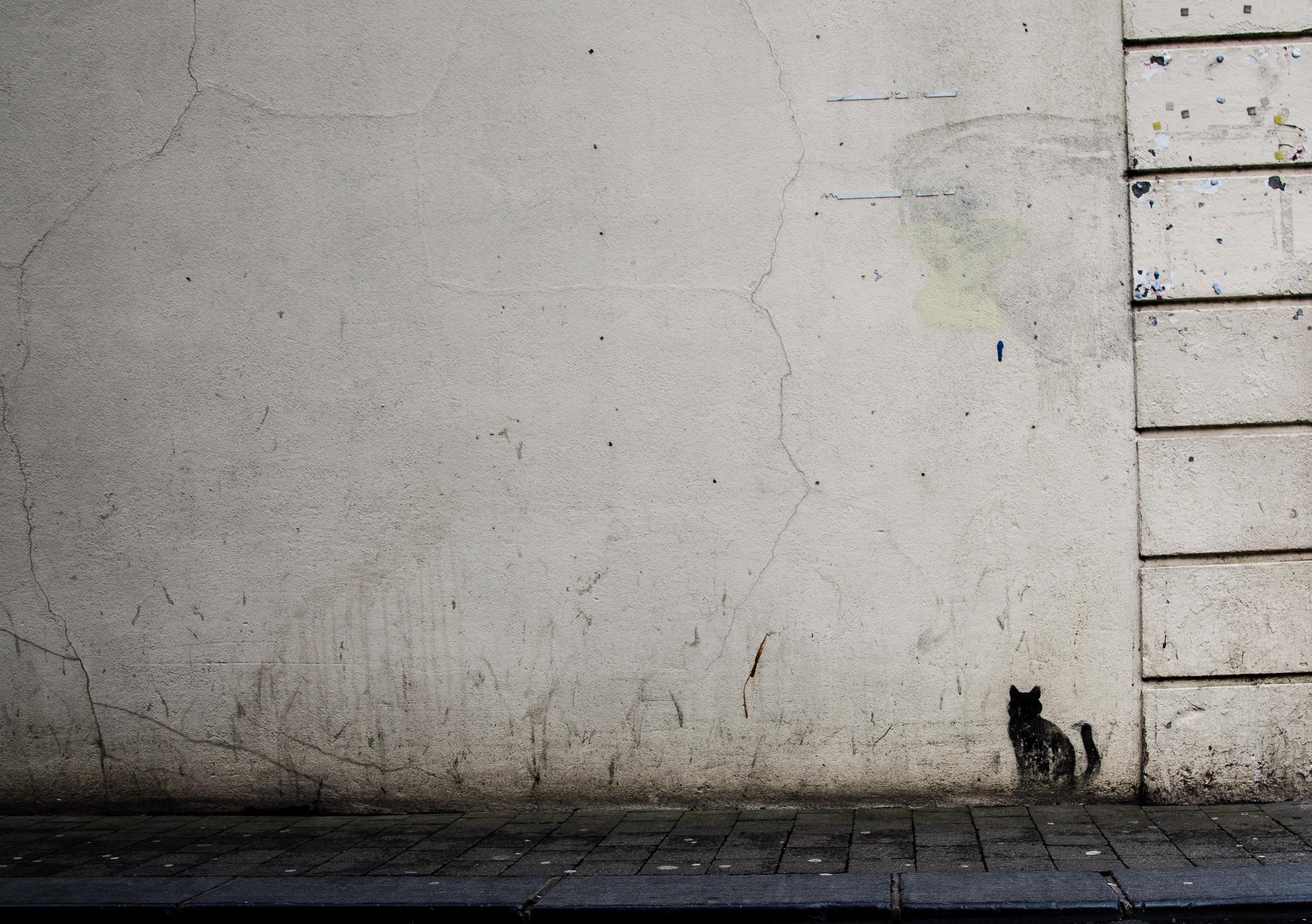 Textured, grungy white wall with mini black cat graffiti artwork in Kilkenny