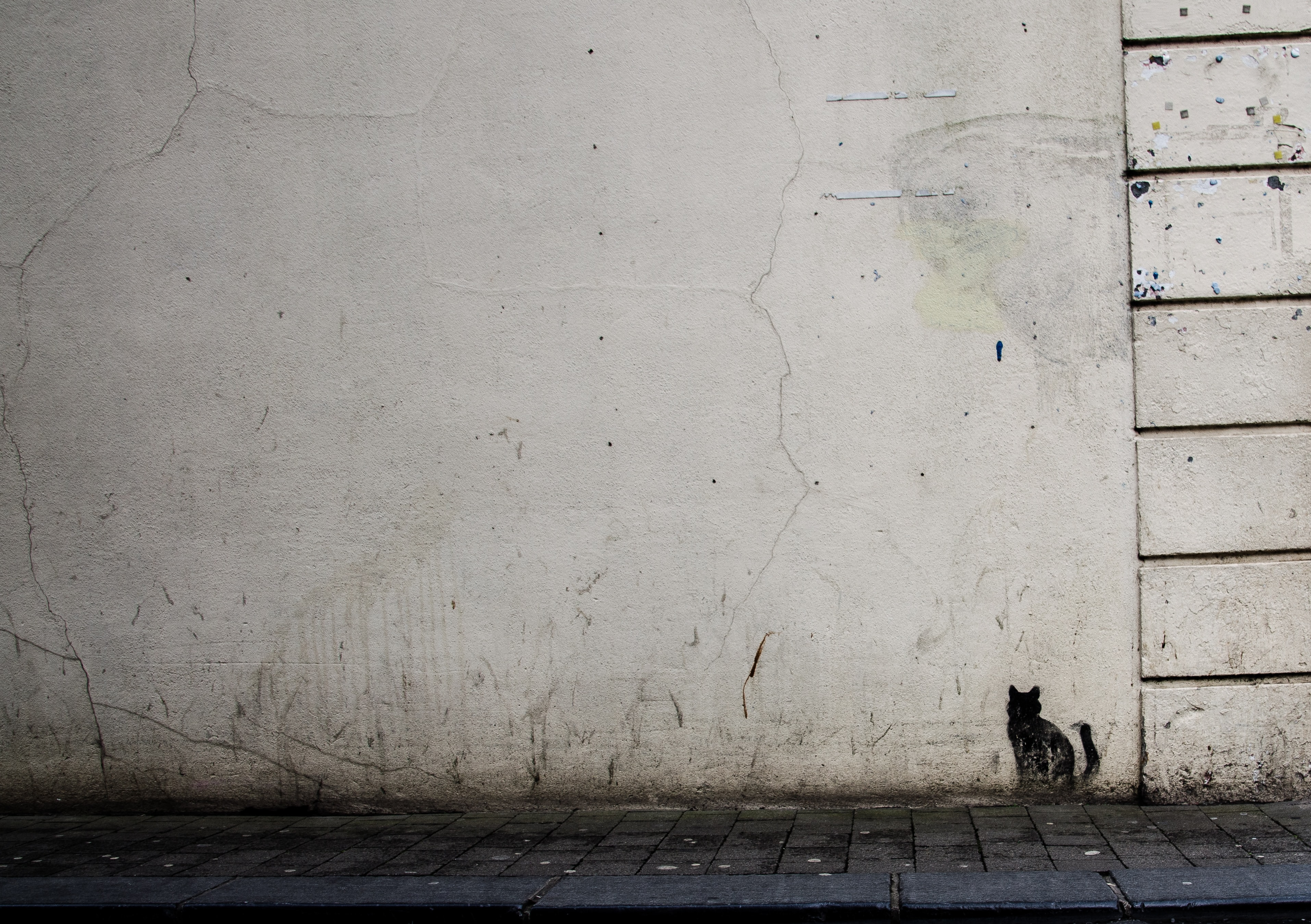 Textured, grungy white wall with mini black cat graffiti artwork in Kilkenny