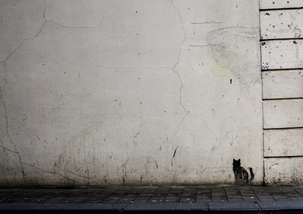 white painted wall with black cat painting