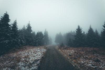 1295. Ködös tájakon