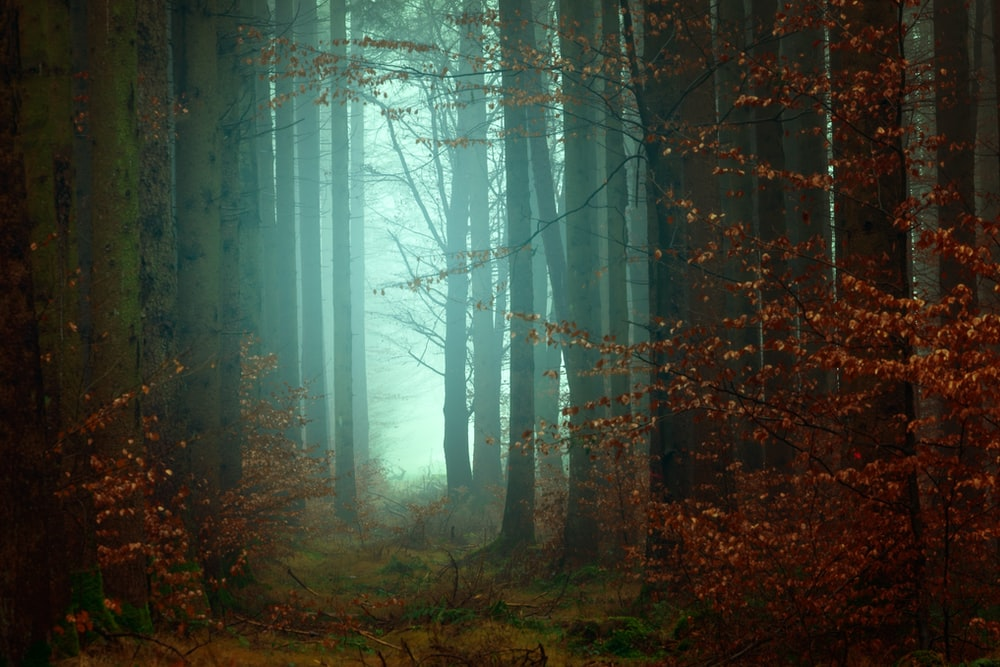 500 Foggy Forest Pictures Stunning Download Free