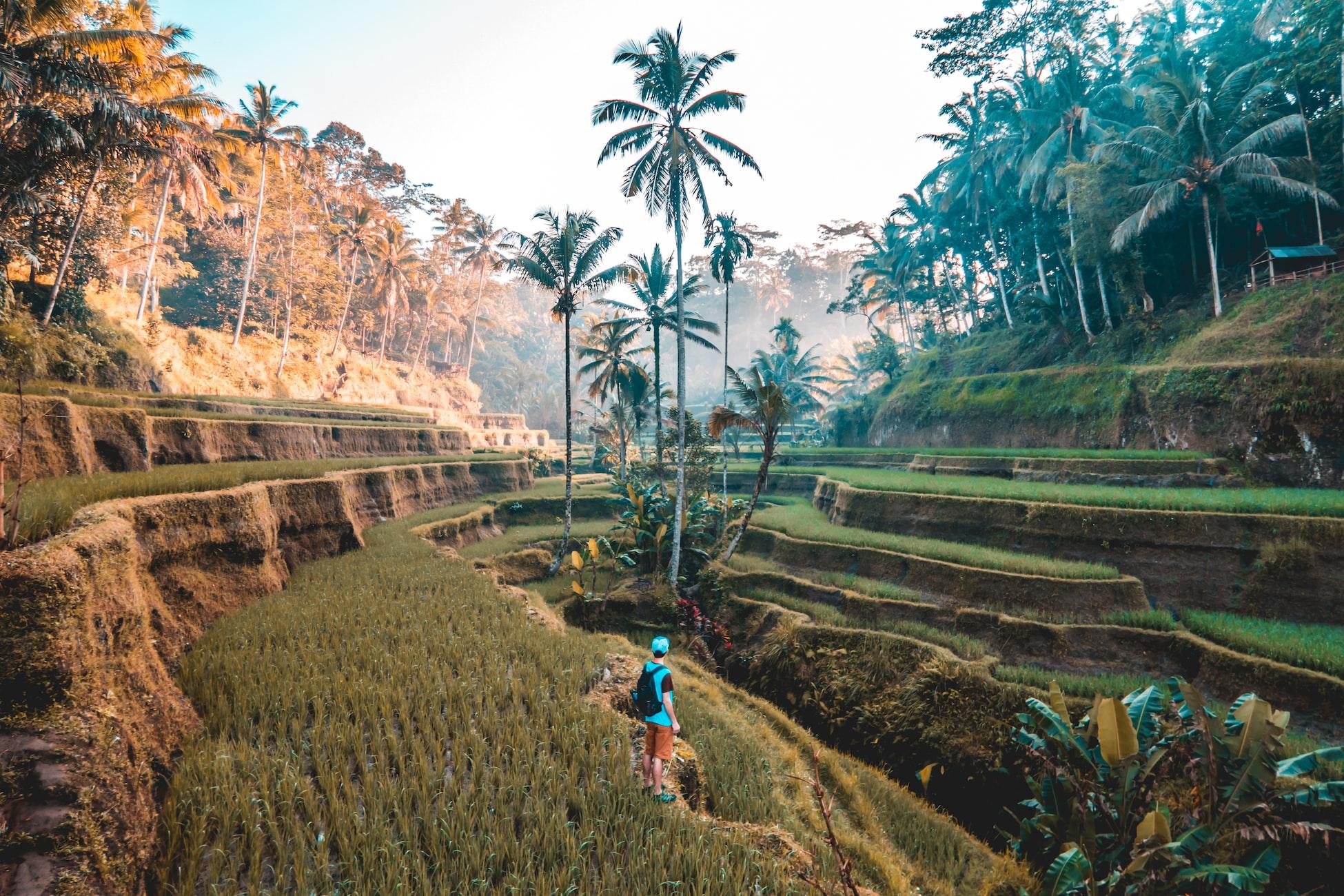 classifica siti UNESCO nel mondo terrazze di riso di bali indonesia