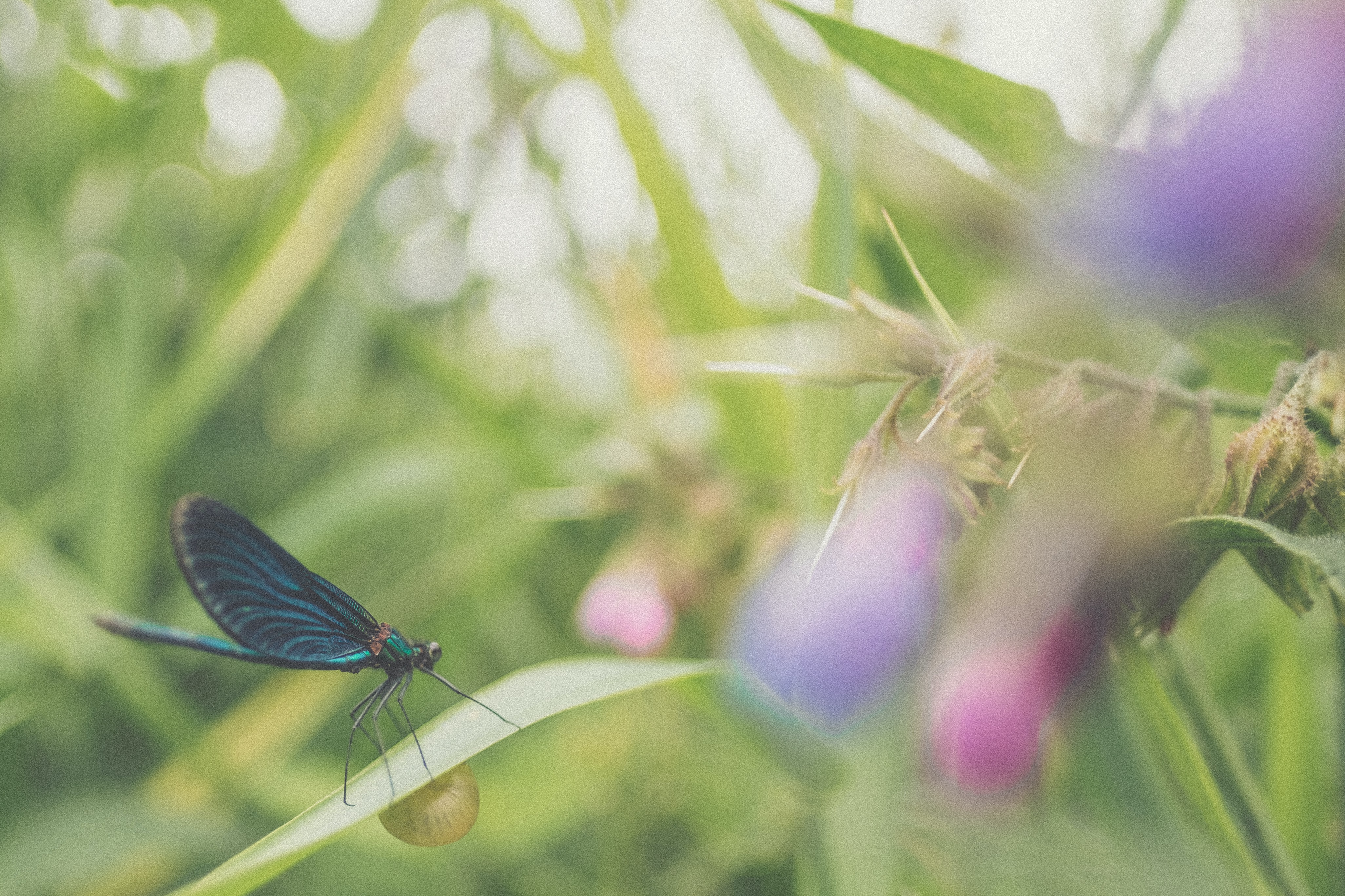 low-angle of blue butterfly on grass
