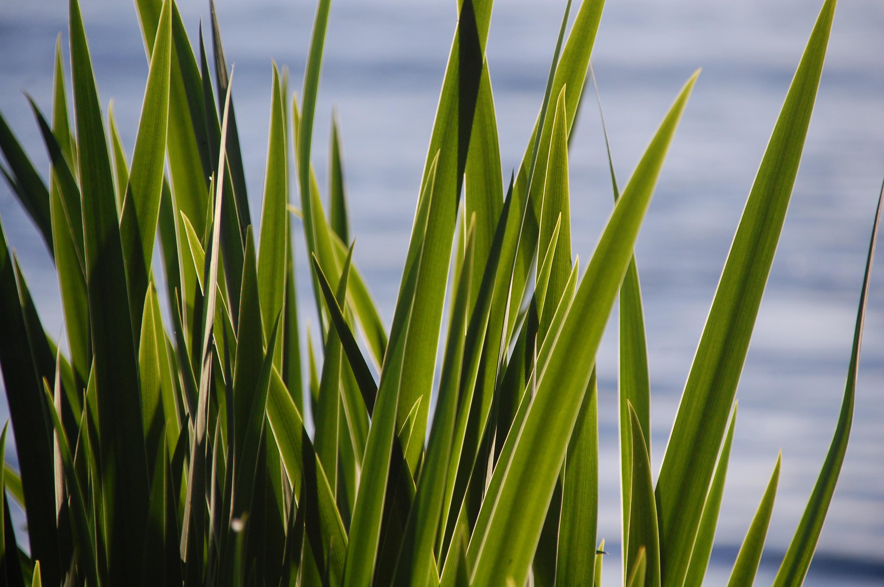 closeup photo of snake plants