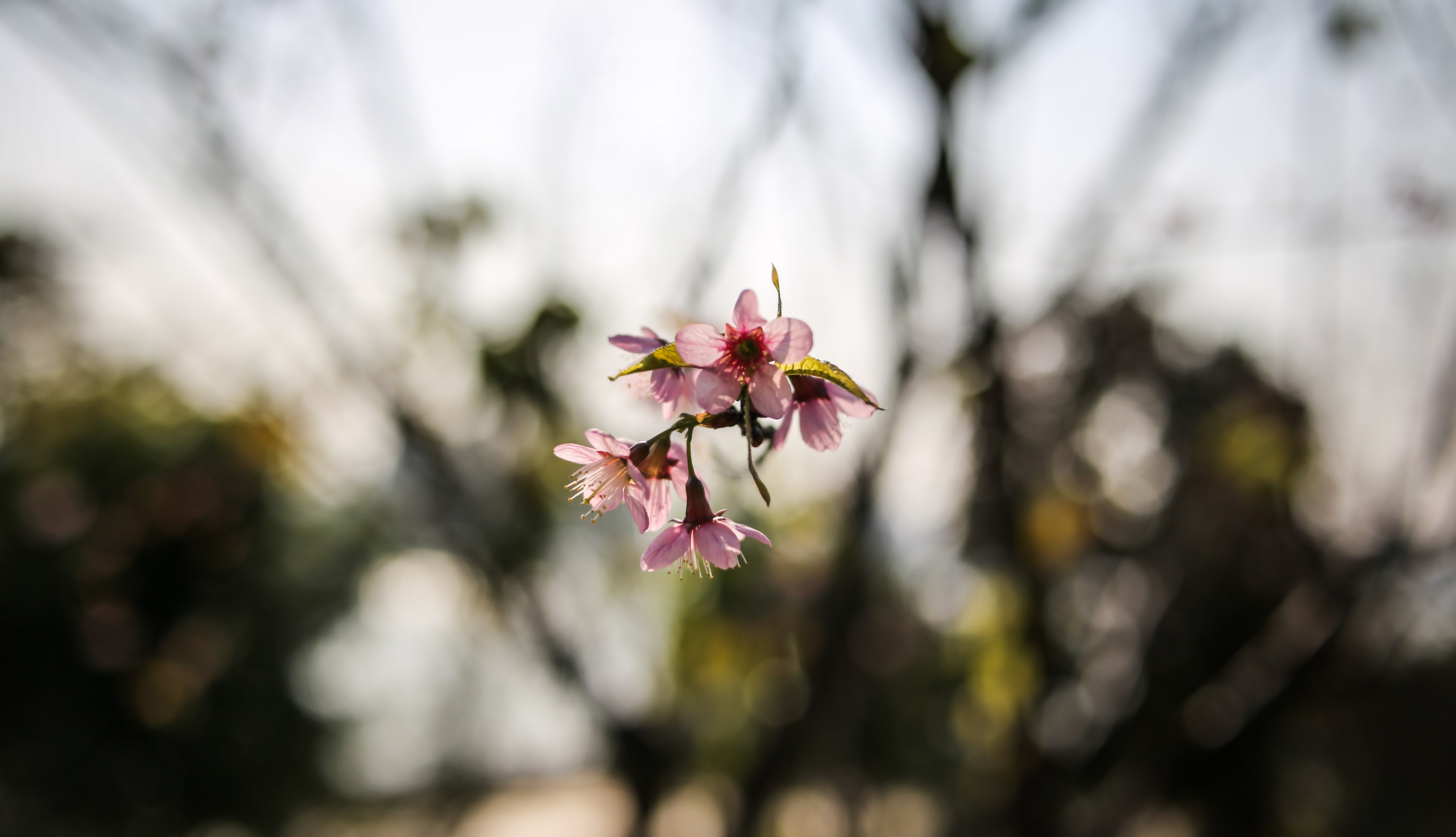 Close-up of a small branchlet of pink blossom