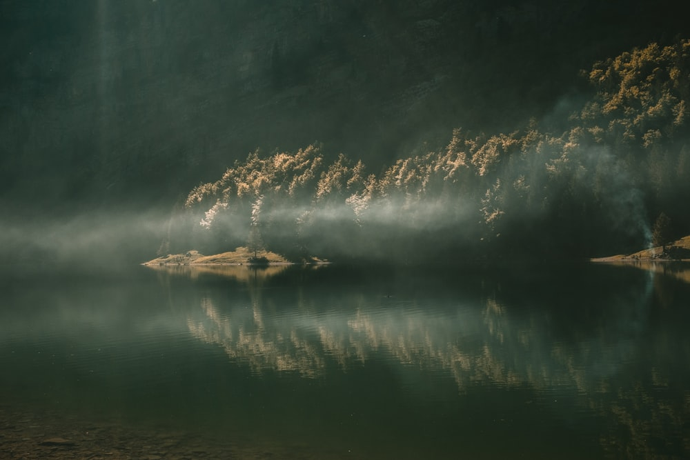 shallow focus photography of body of water surrounded of trees