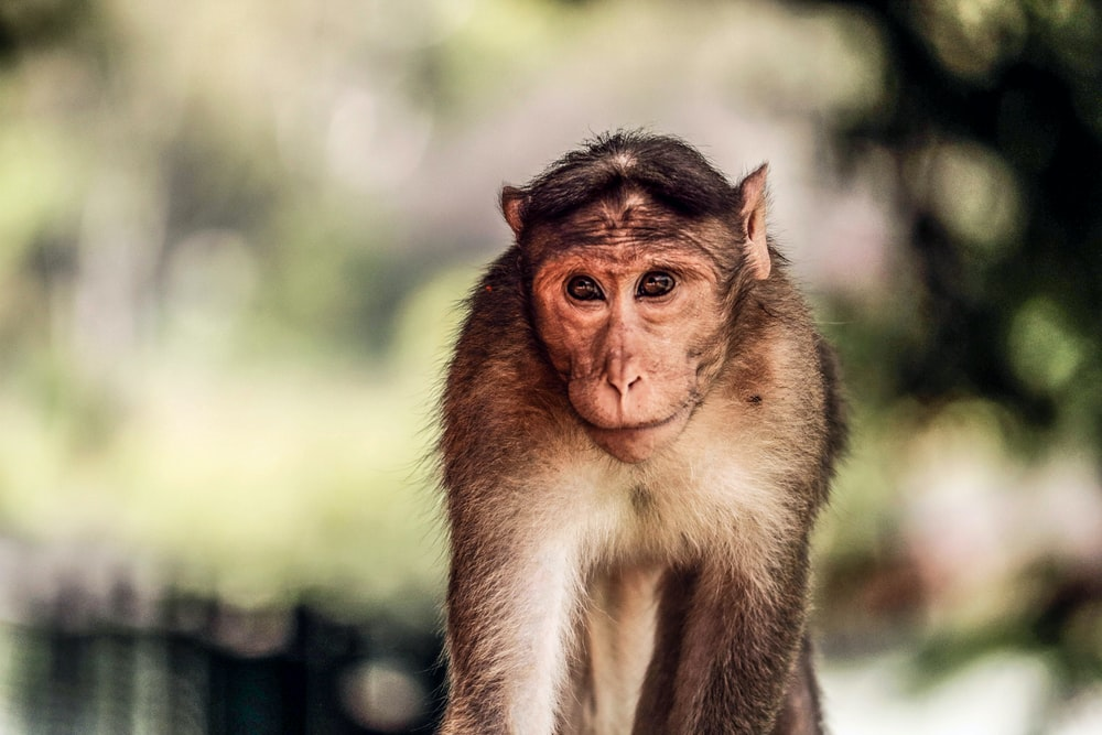 shallow focus photography of monkey