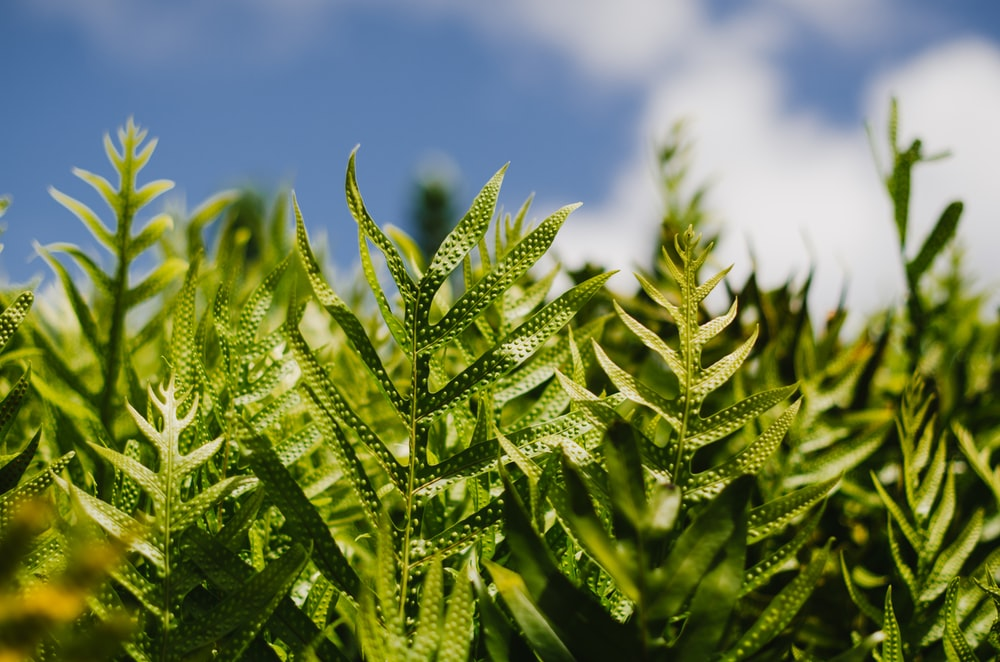 focus photography of linear green leafed plants under cloudy sky