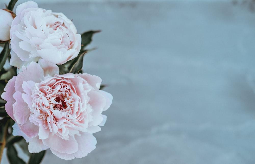 Pink flowers in a vase photo by alisa anton alisaanton on unsplash shallow focus photography of pink flowers mightylinksfo