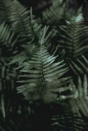 1605. Növények világa
