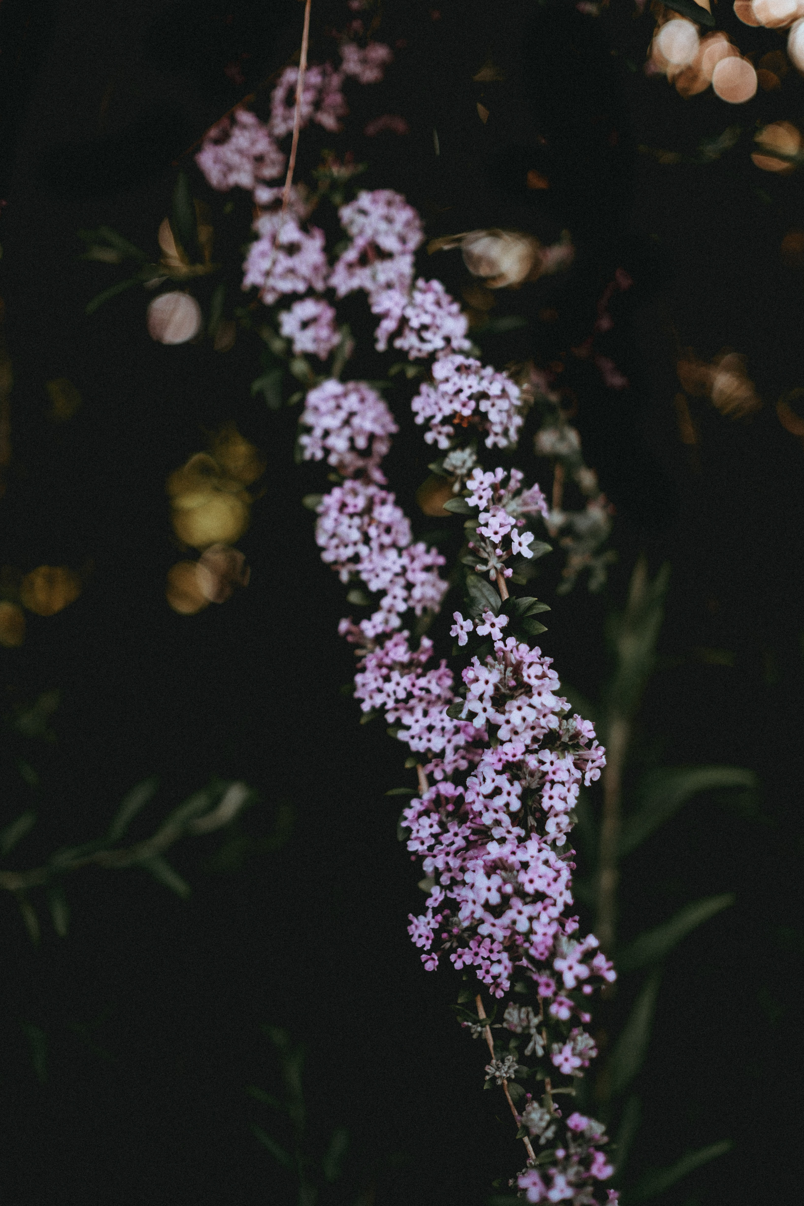 shallow focus photography of pink plants
