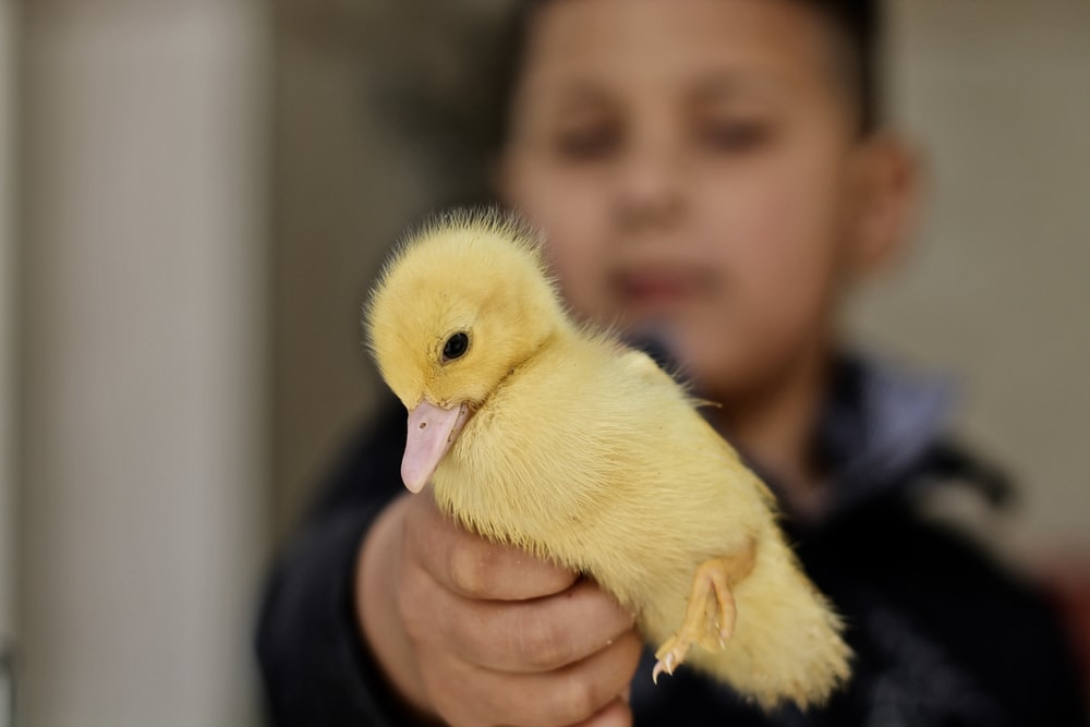 toddler holding yellow duck