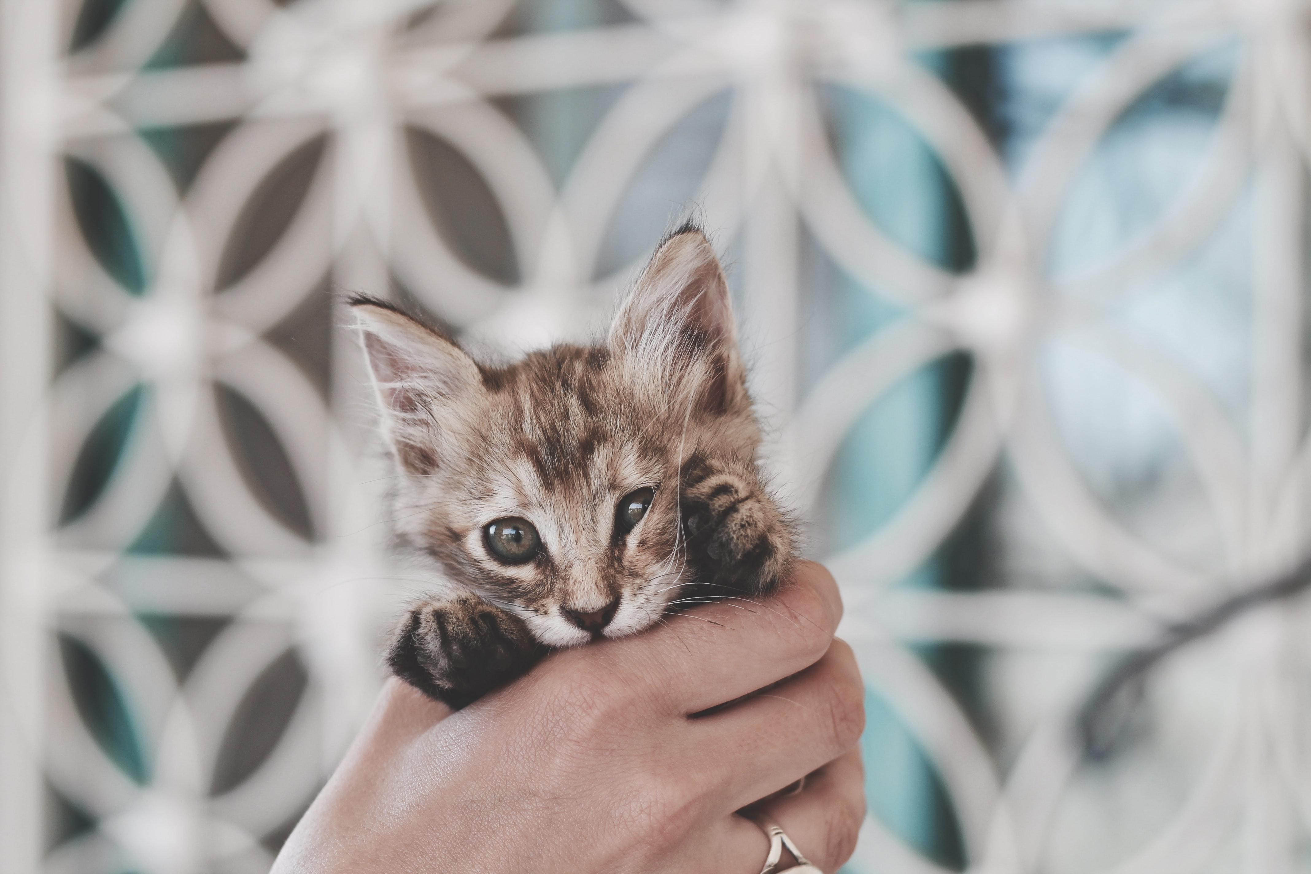 A person's hand holding a kitten