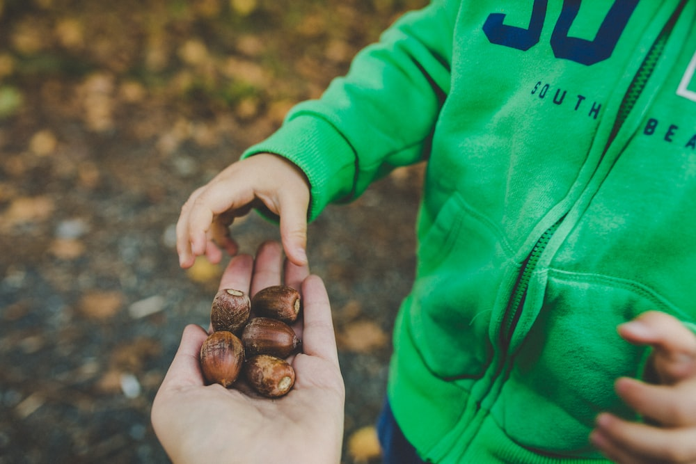 brown nuts on person's left palm
