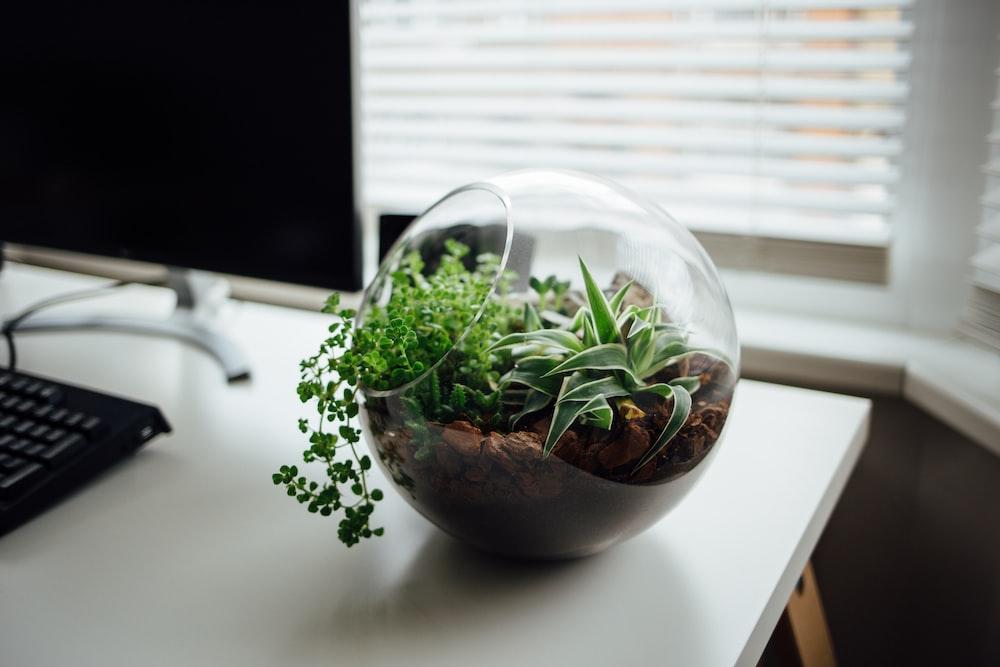 tilt shift lens photo of glass bowl
