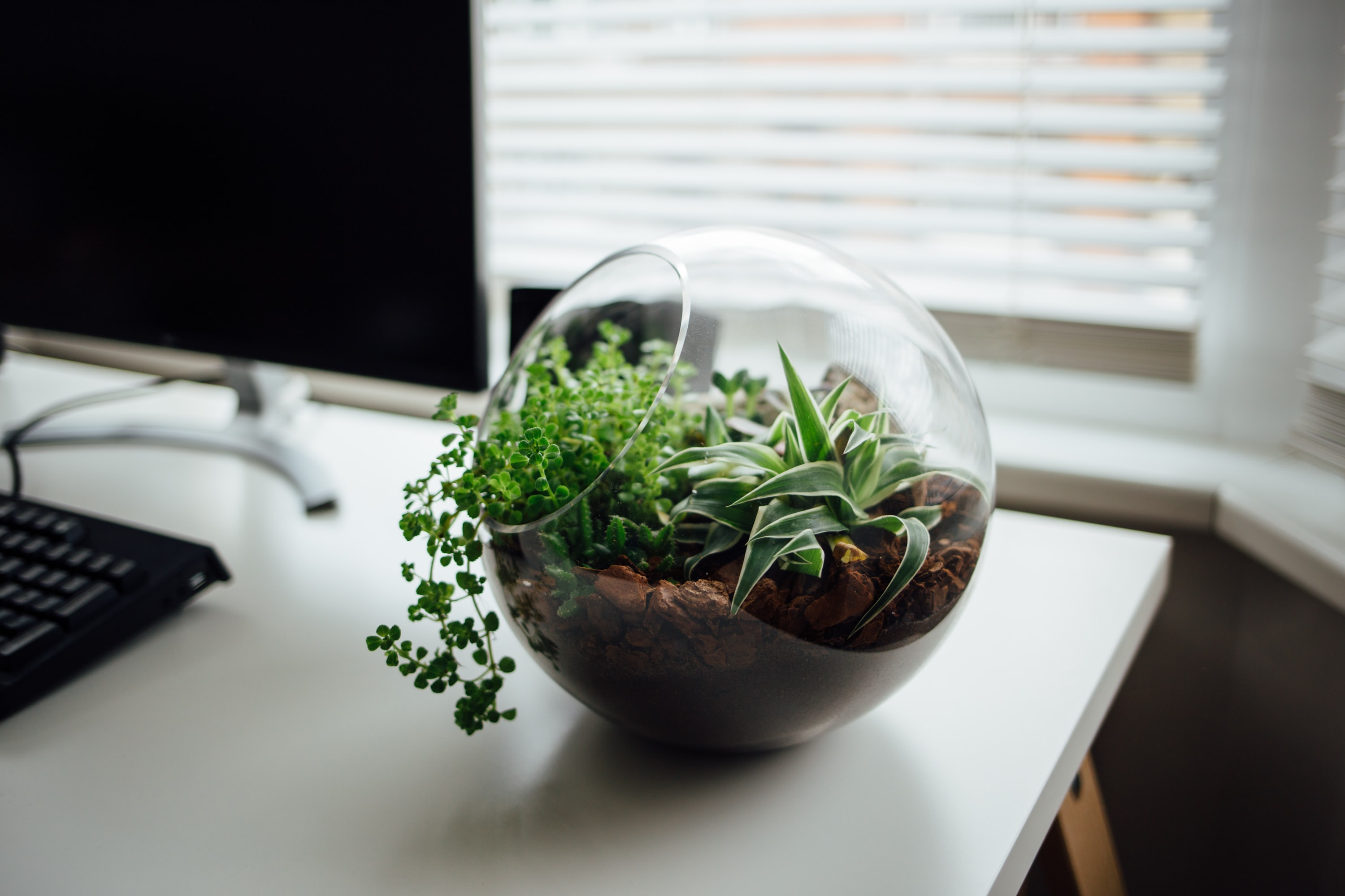 A spherical terrarium housing small succulents on a white computer desk