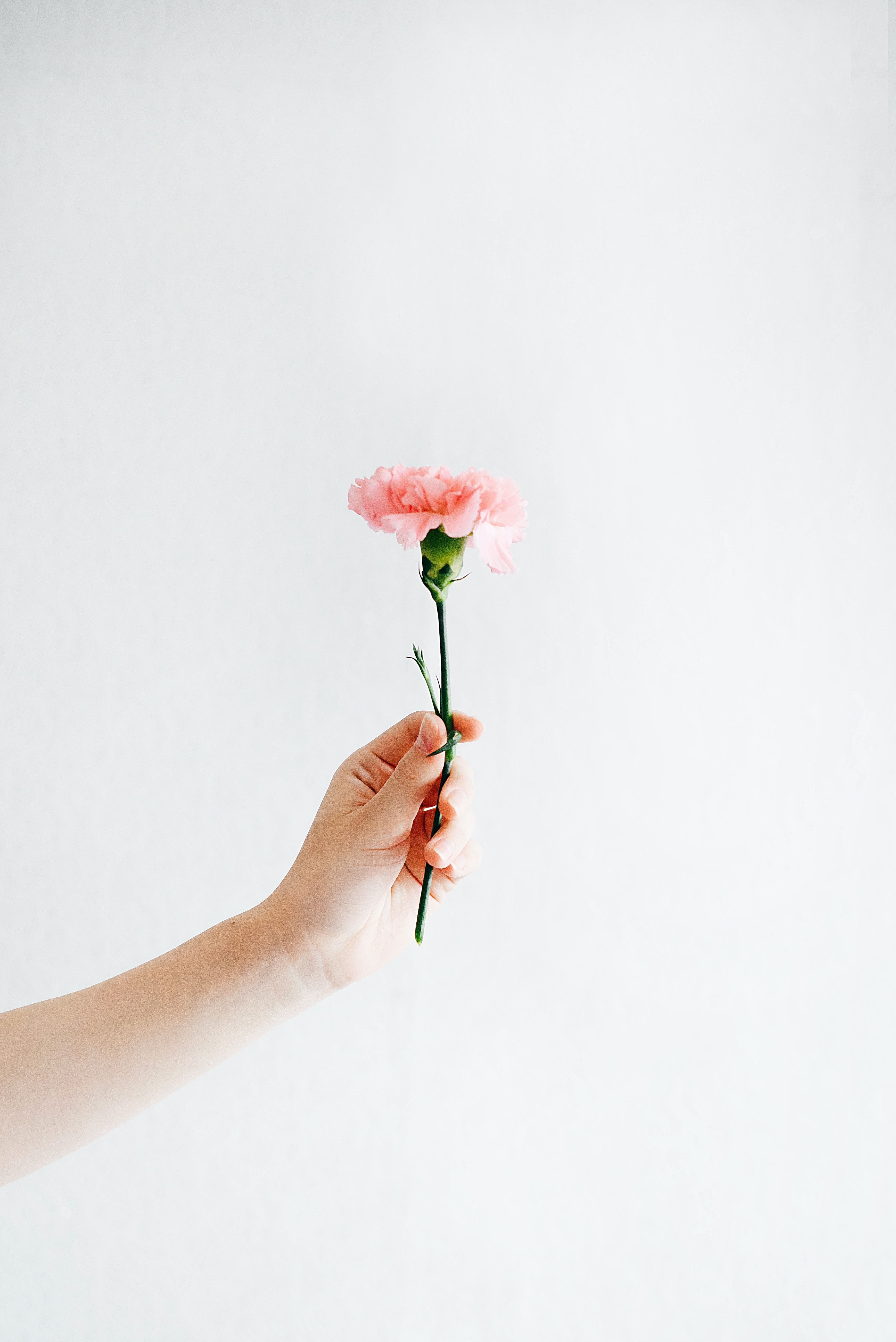 A person holding a flower up.
