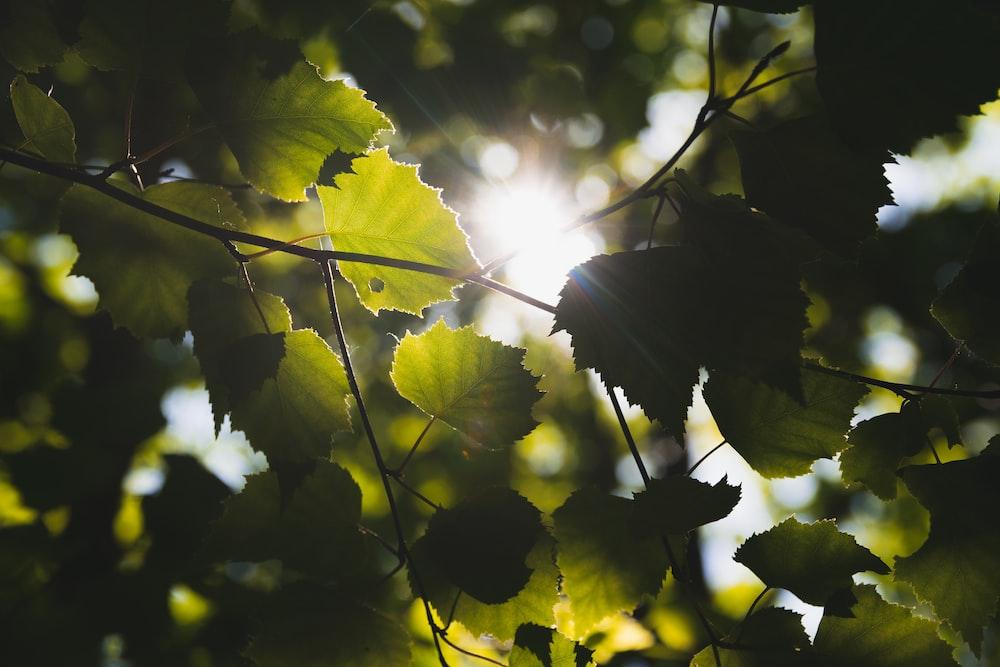 sunlight across green trees