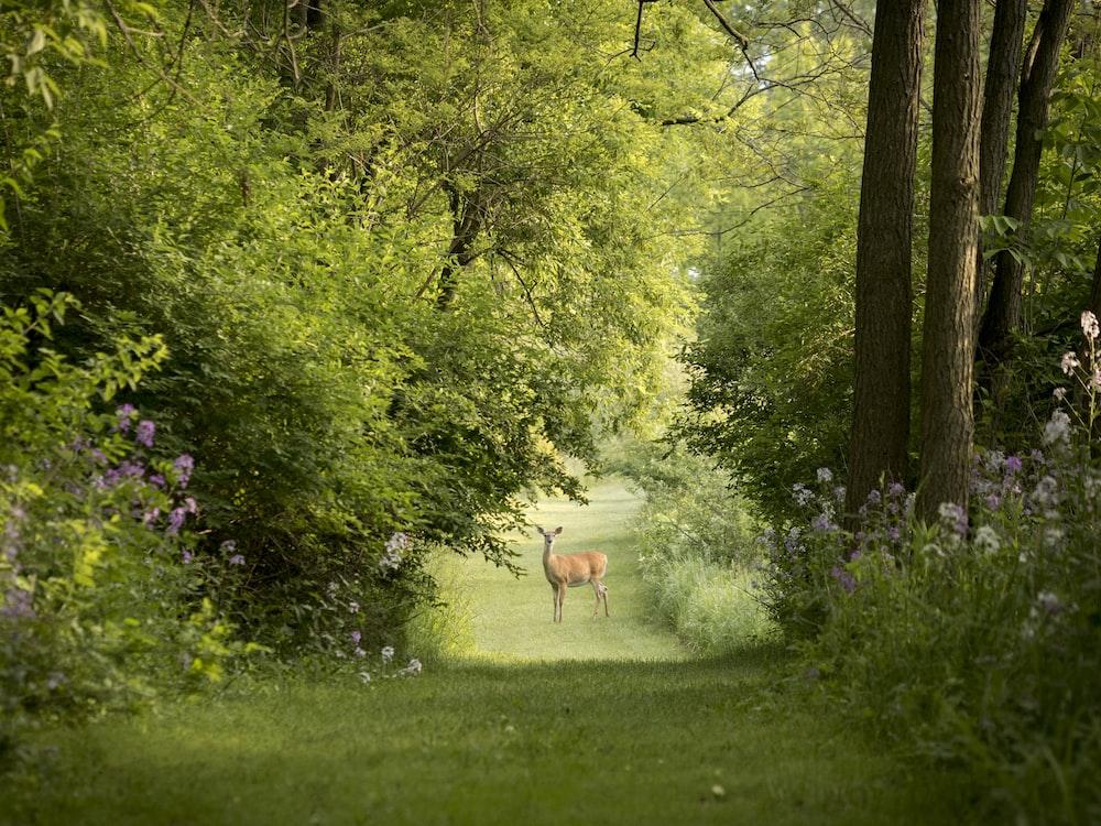 deer on grass field photography