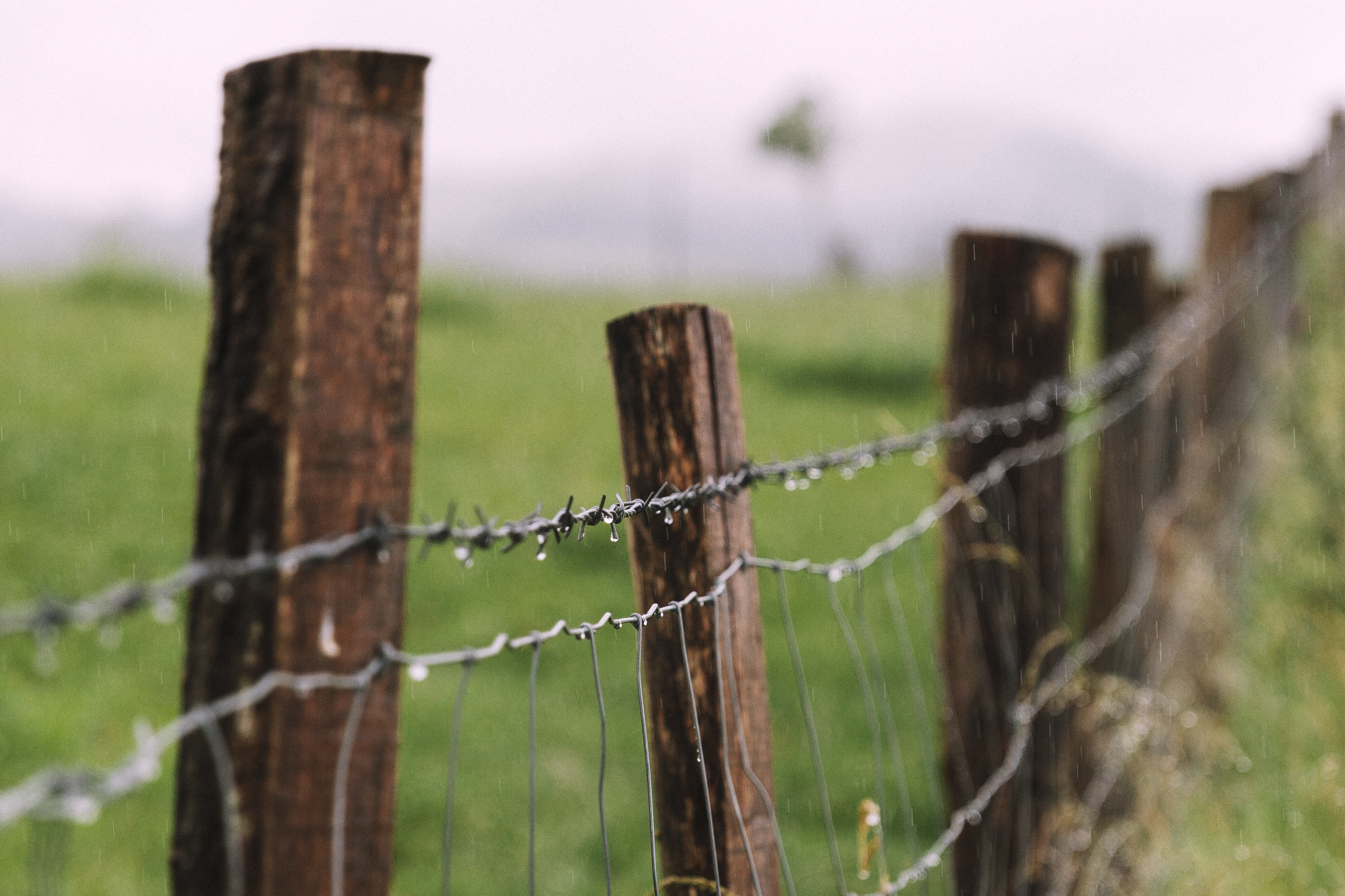 shallow focus photography of barb wire