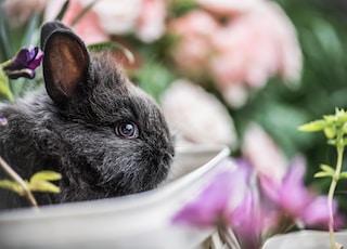 shallow focus photography of black rabbit near green plant