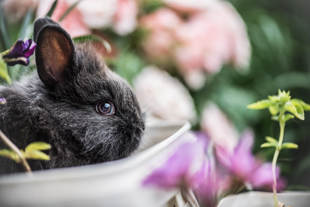shallow focus photography of black rabbit near green plant