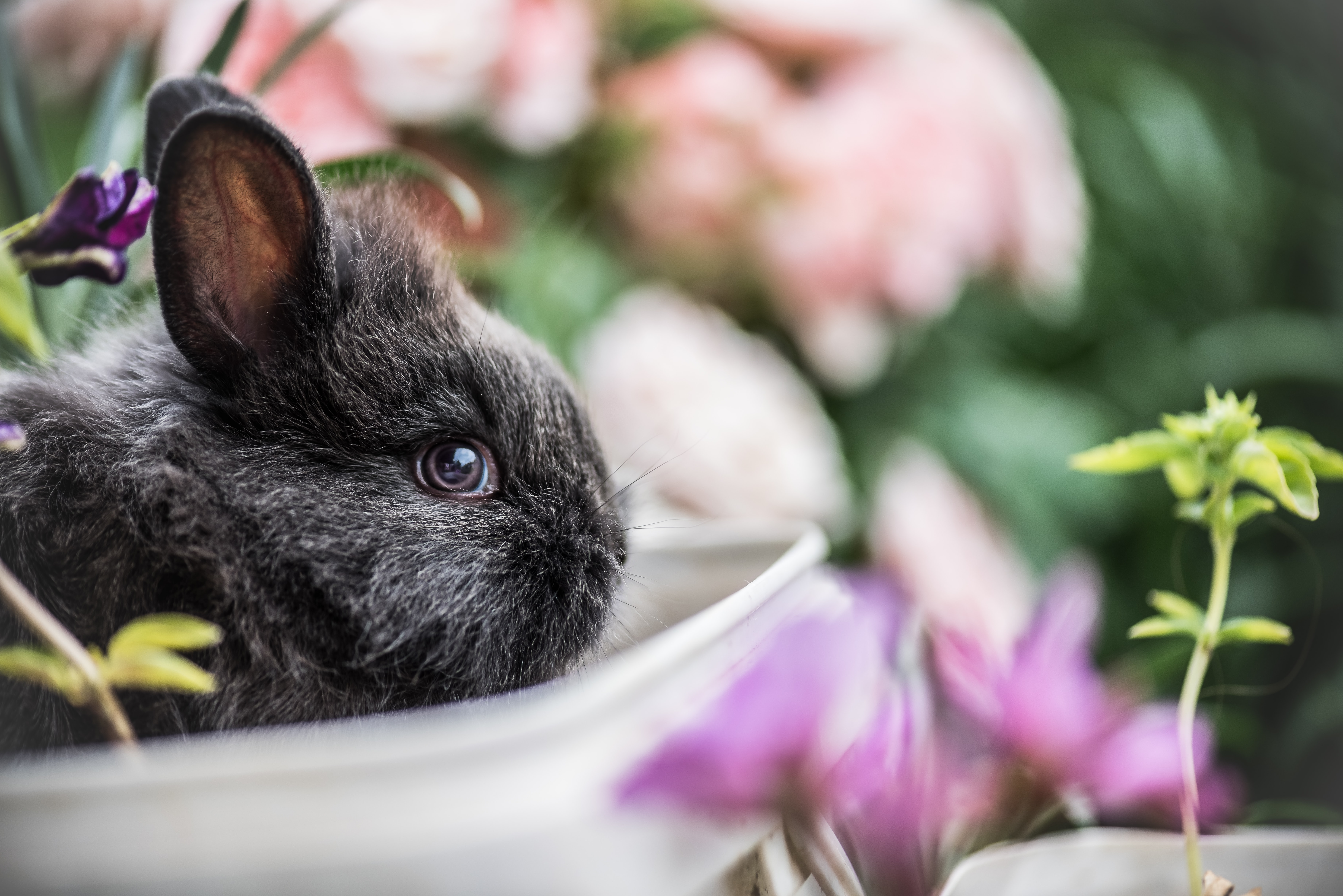 A black baby rabbit beside potted plants and flowers
