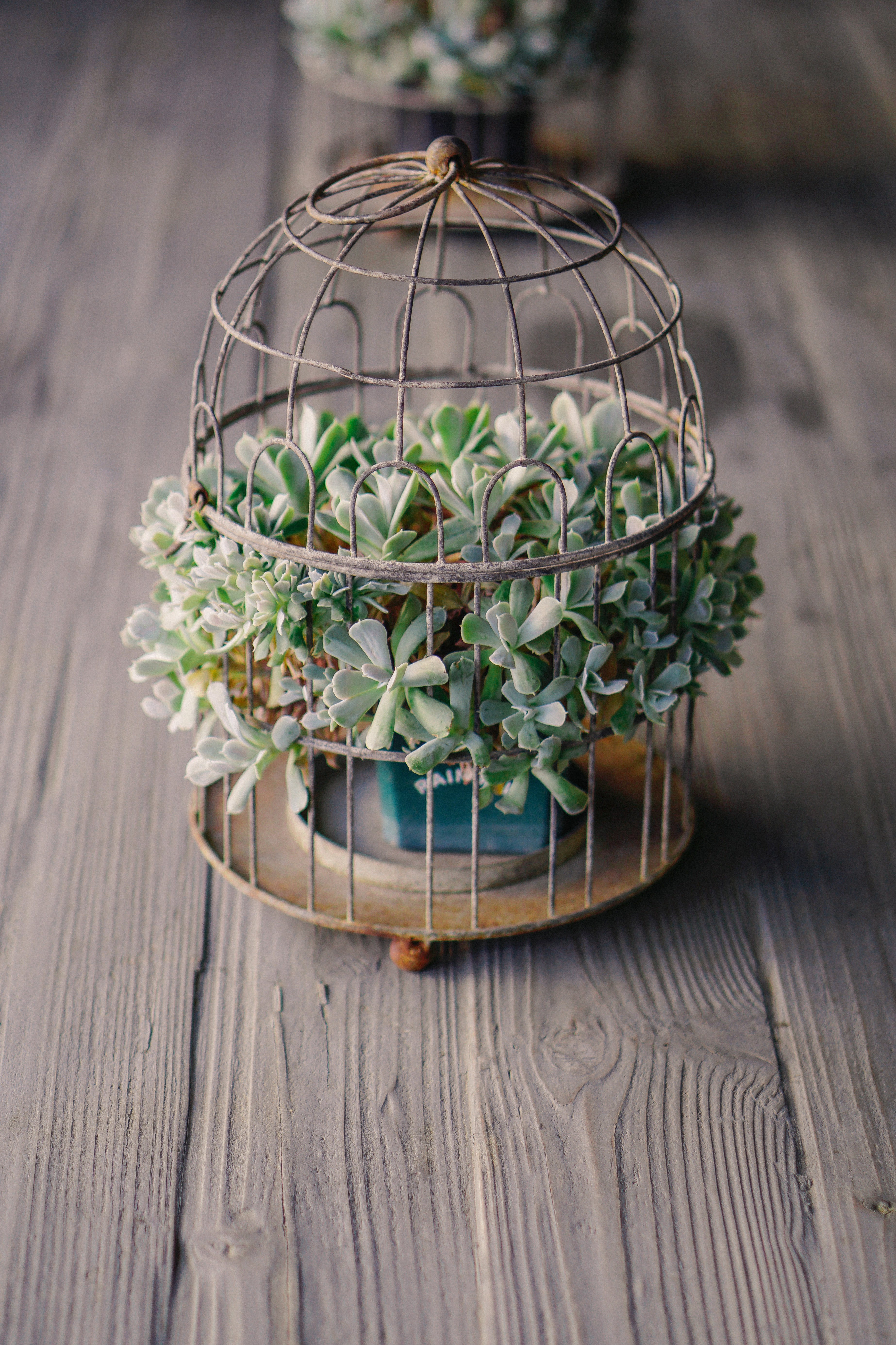 A succulent in a flowerpot inside a rusty cage