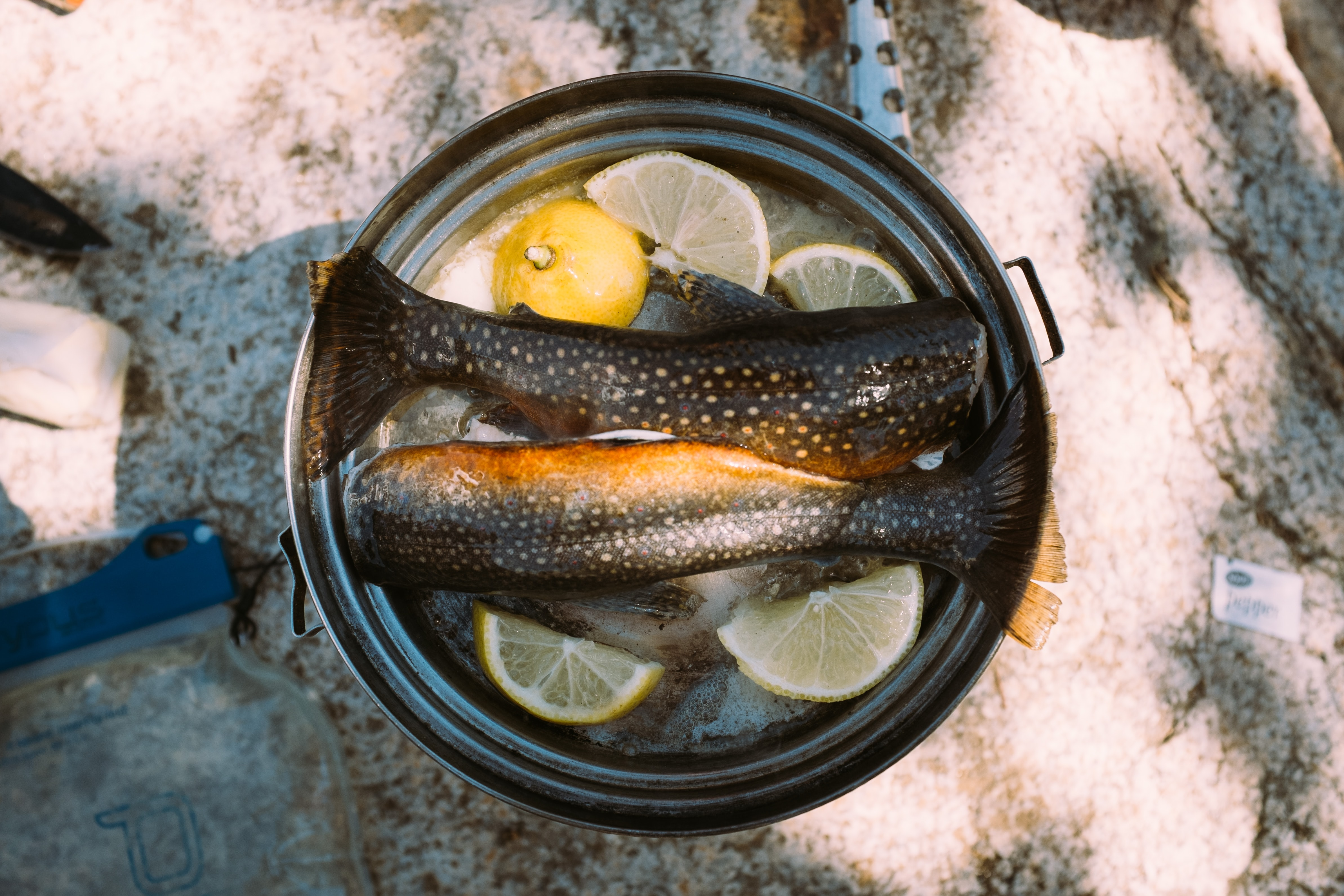 Two pieces of trout and pieces of lemon in a pan