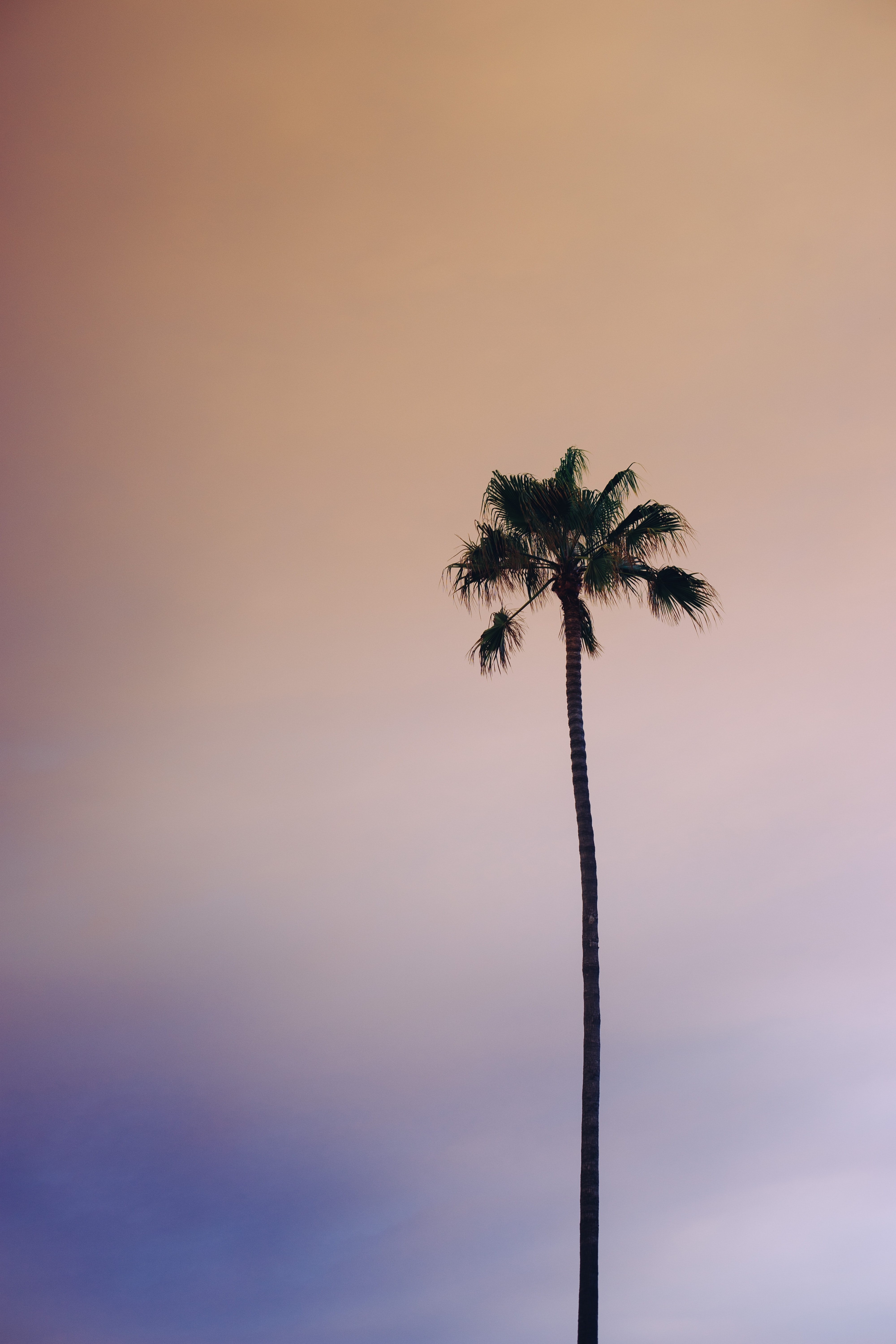 worm's-eye view photography of green palm tree under cloudy sky