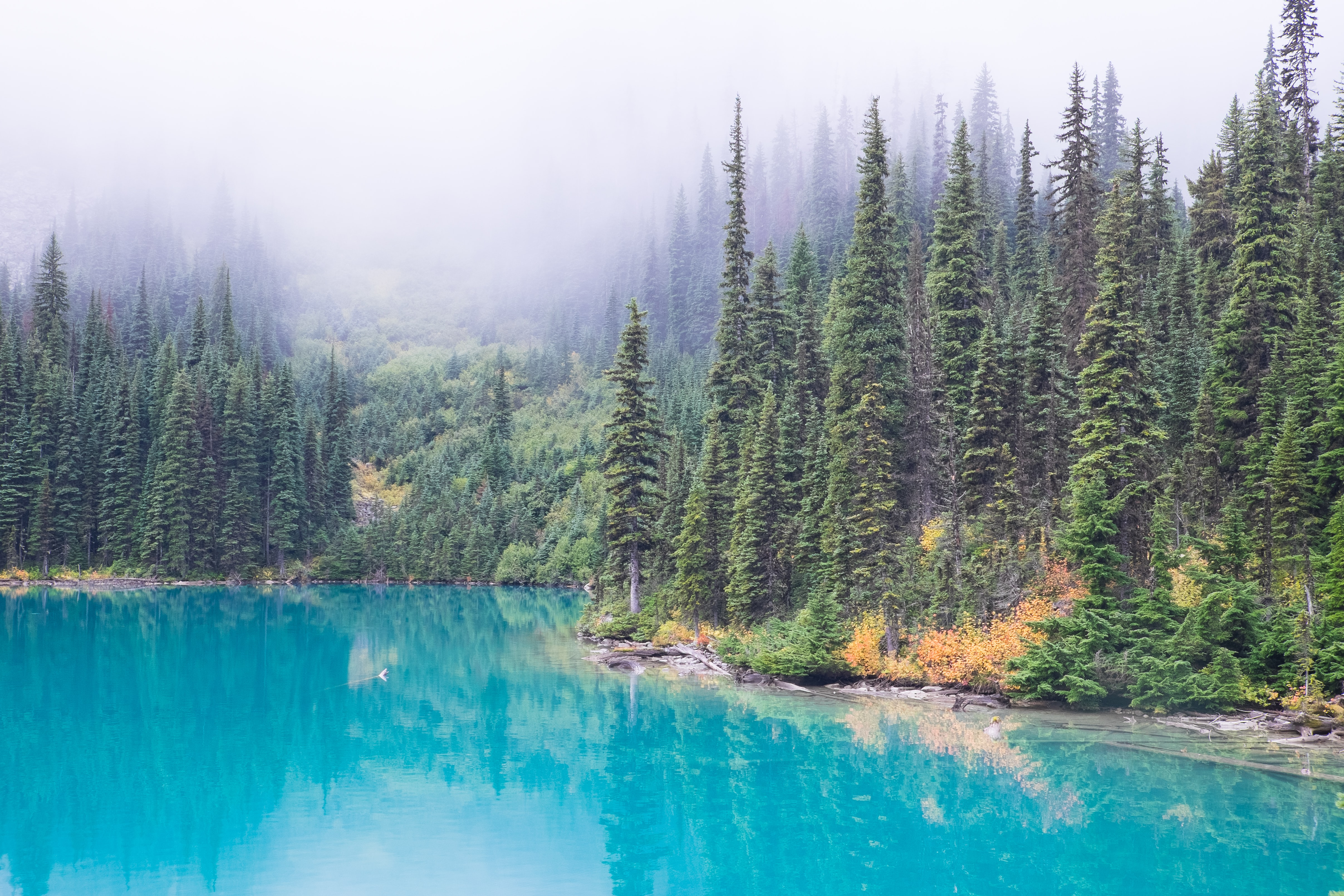 A forest of pine trees along the edge of a bright turquoise river in Joffre Lakes Trail