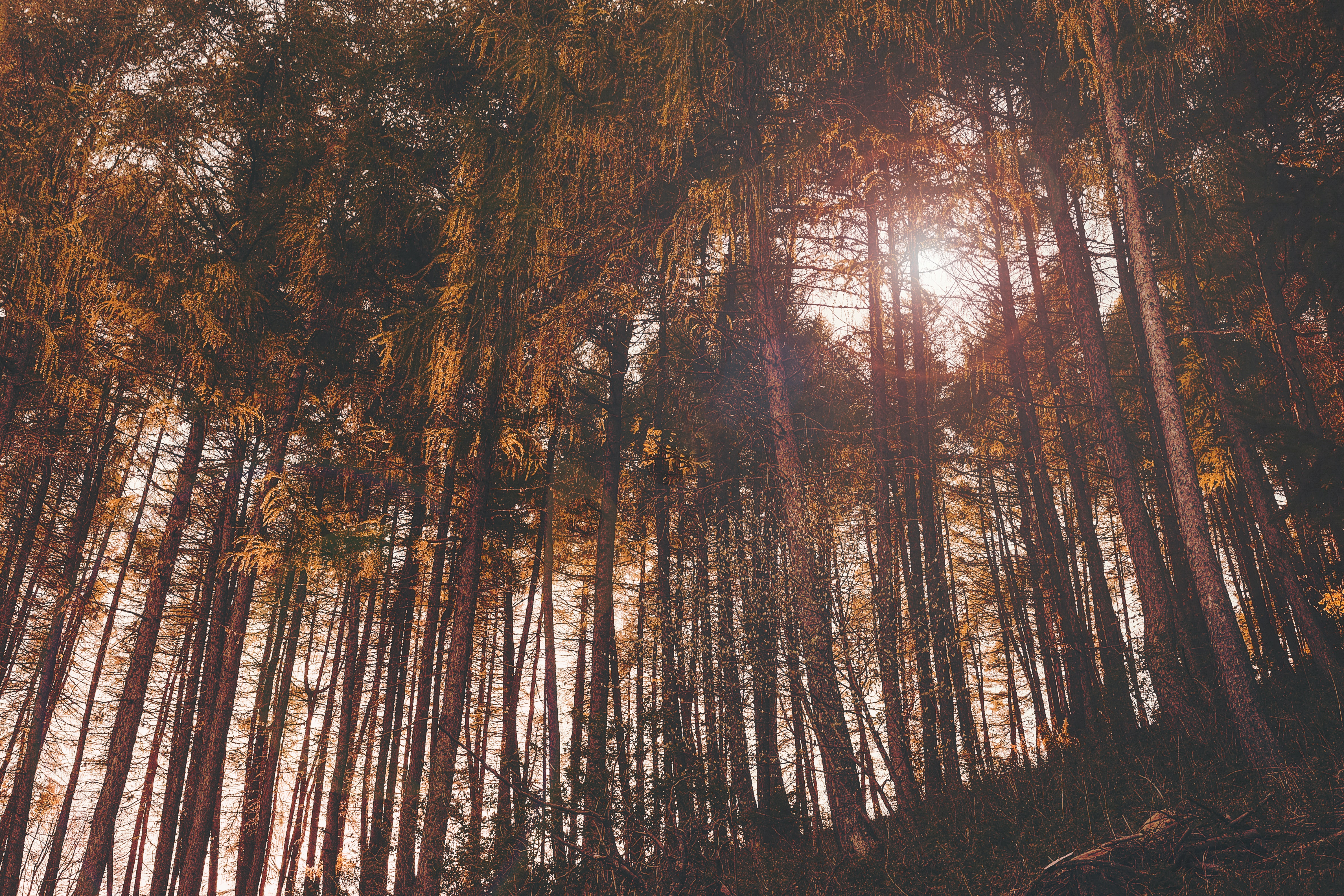 nature photo of tall trees during daytime