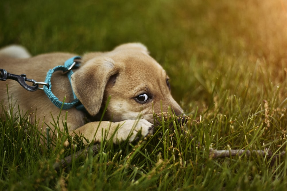 shallow focus photography of puppy lying on green grass