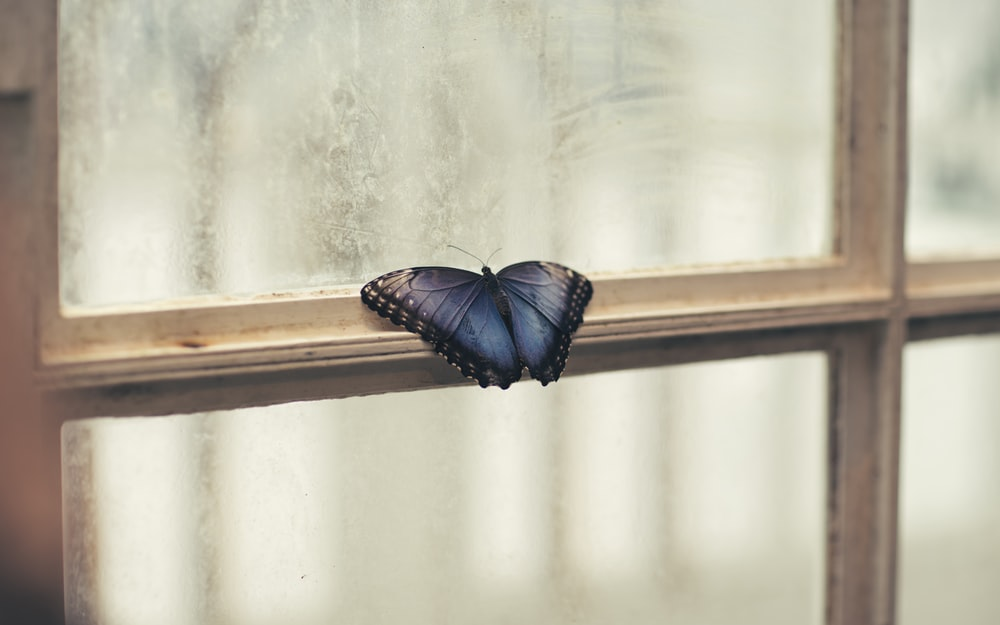 photo of butterfly perching on window