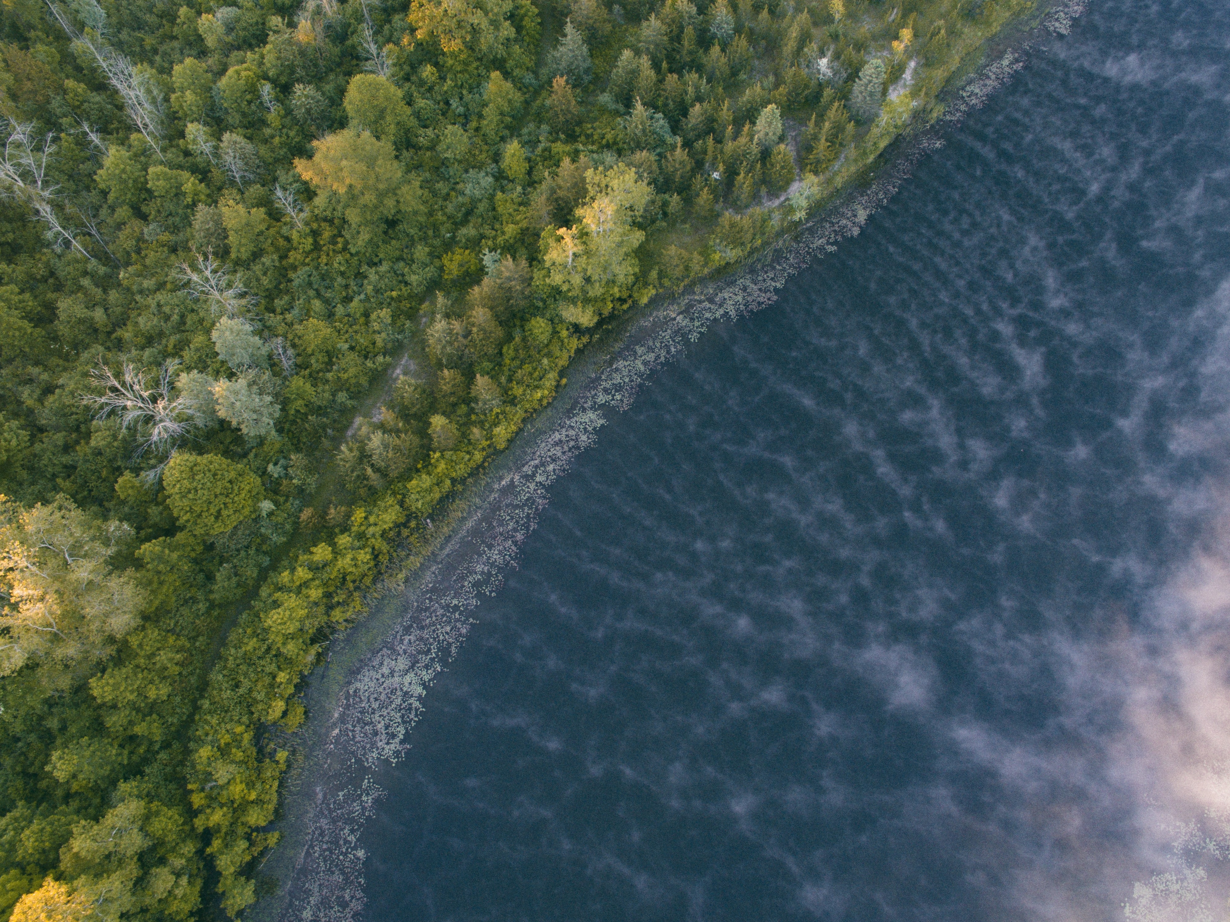 A drone view of the lake, shore, and forest in Flushing, Michigan, United States