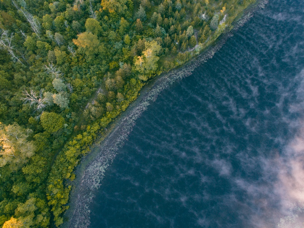 A Drone View Of The Lake Shore And Forest In Flushing Michigan