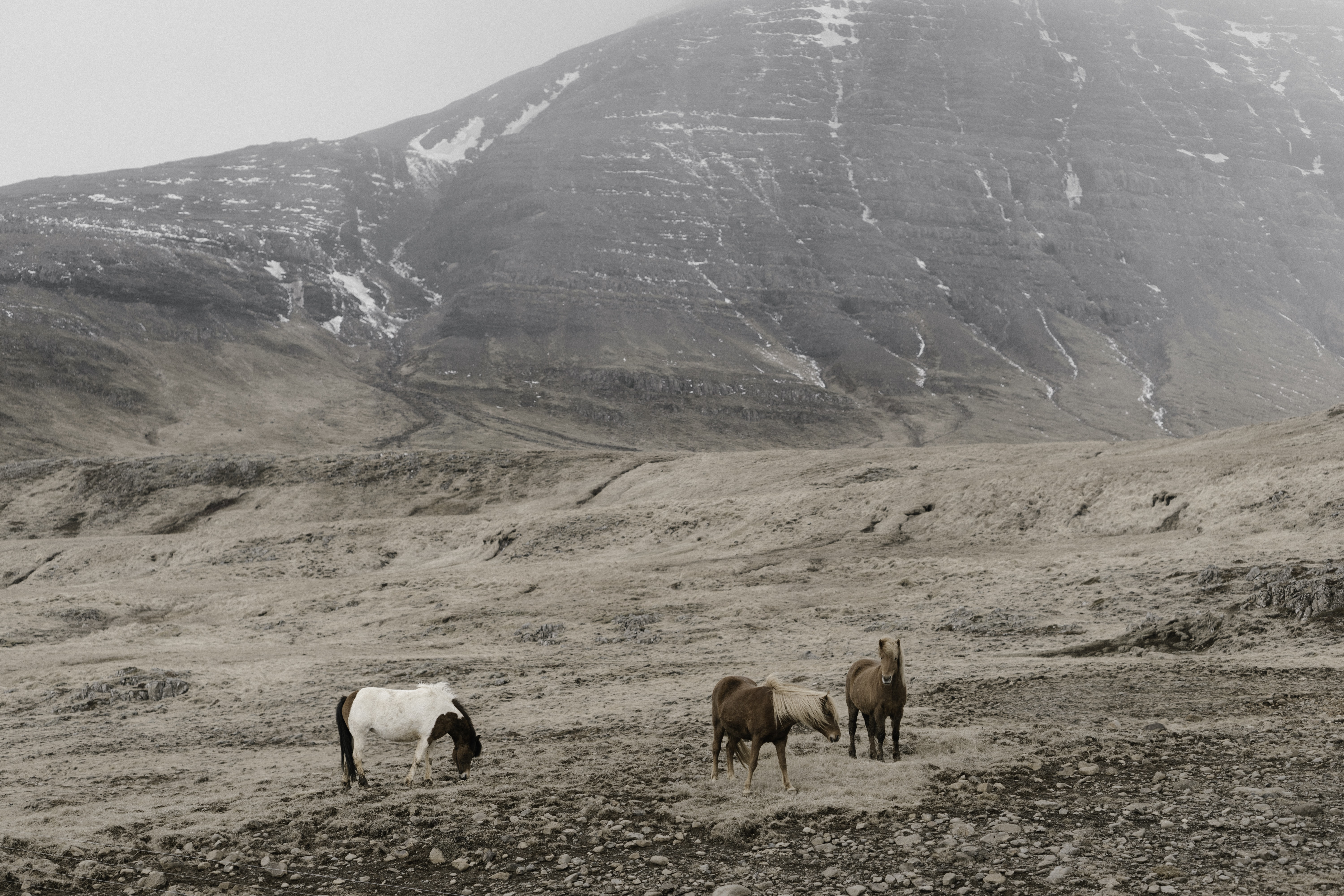 Three horses grazing on a rocky plain at the foot of a mountain