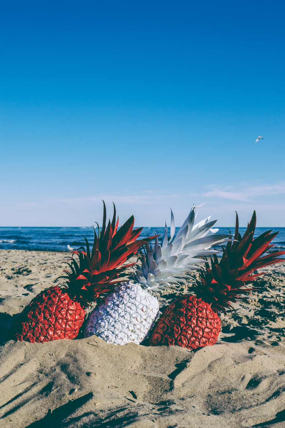 red and white pineapples on seashore