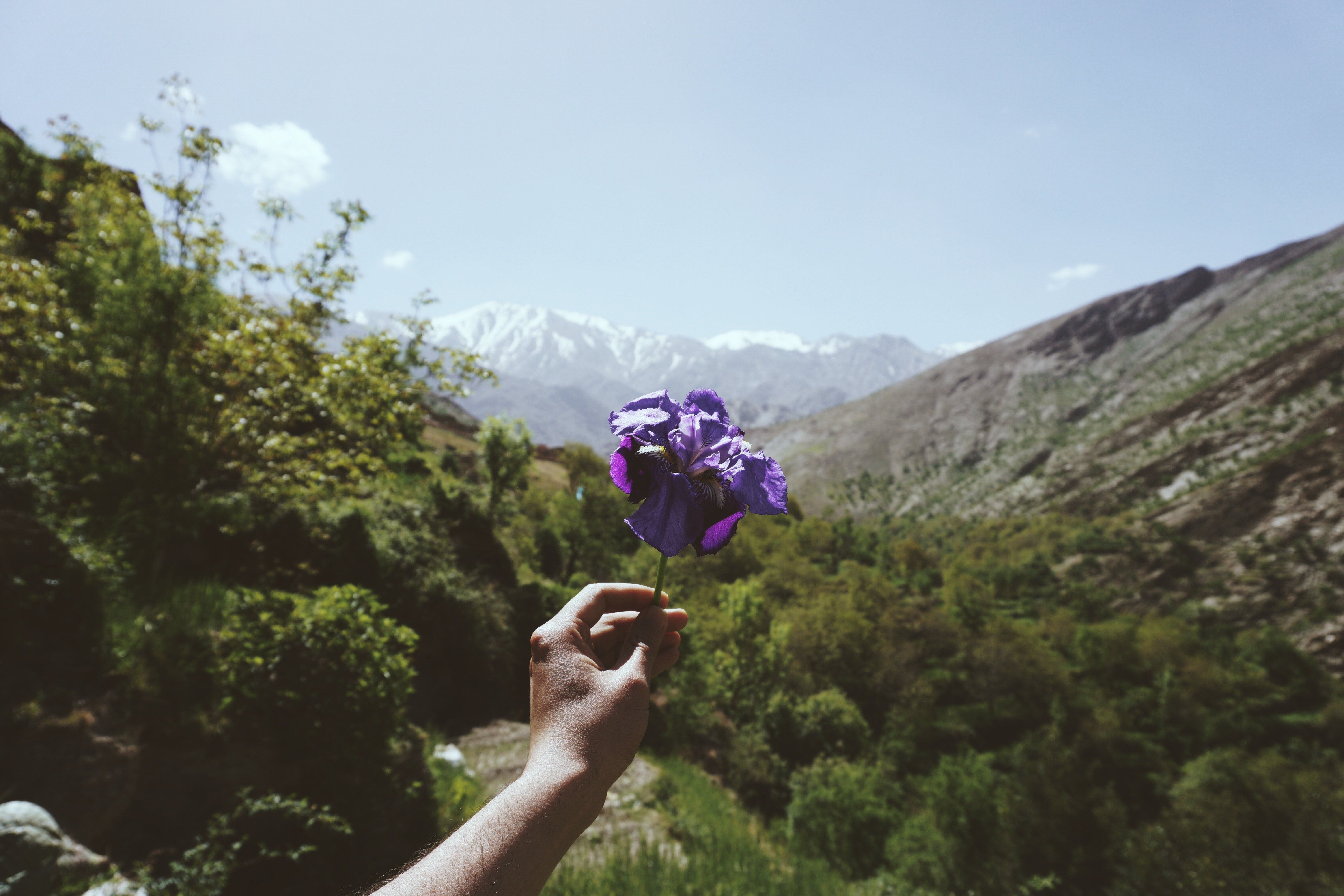 A person's hands holding up a purple flower in a mountain valley