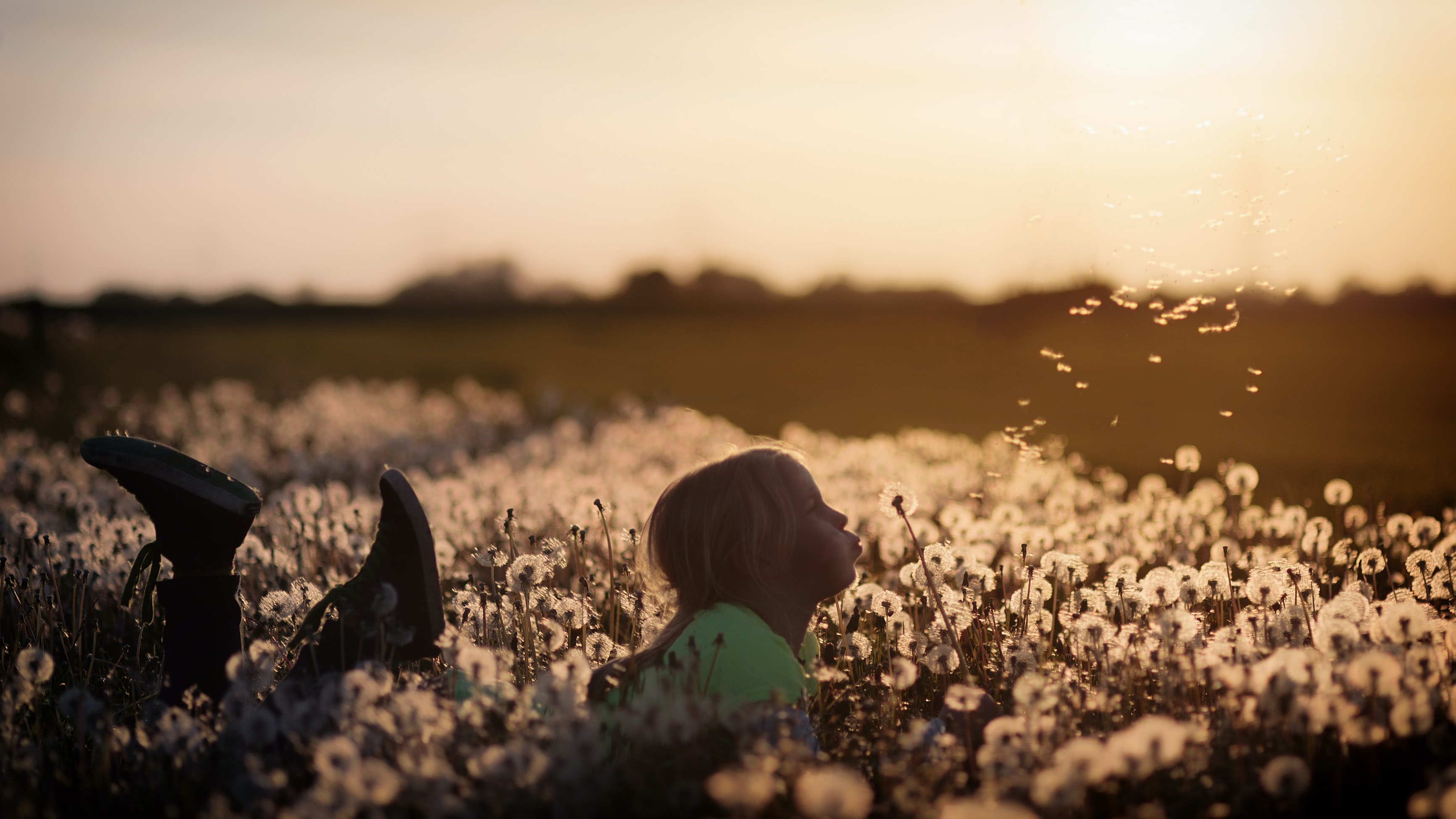 A little girl laying in a field of dandelions making a wish