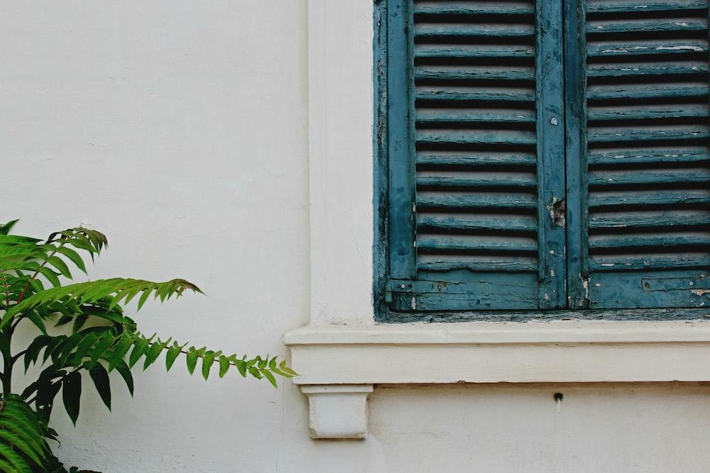 green leafed plants beside blue wooden window