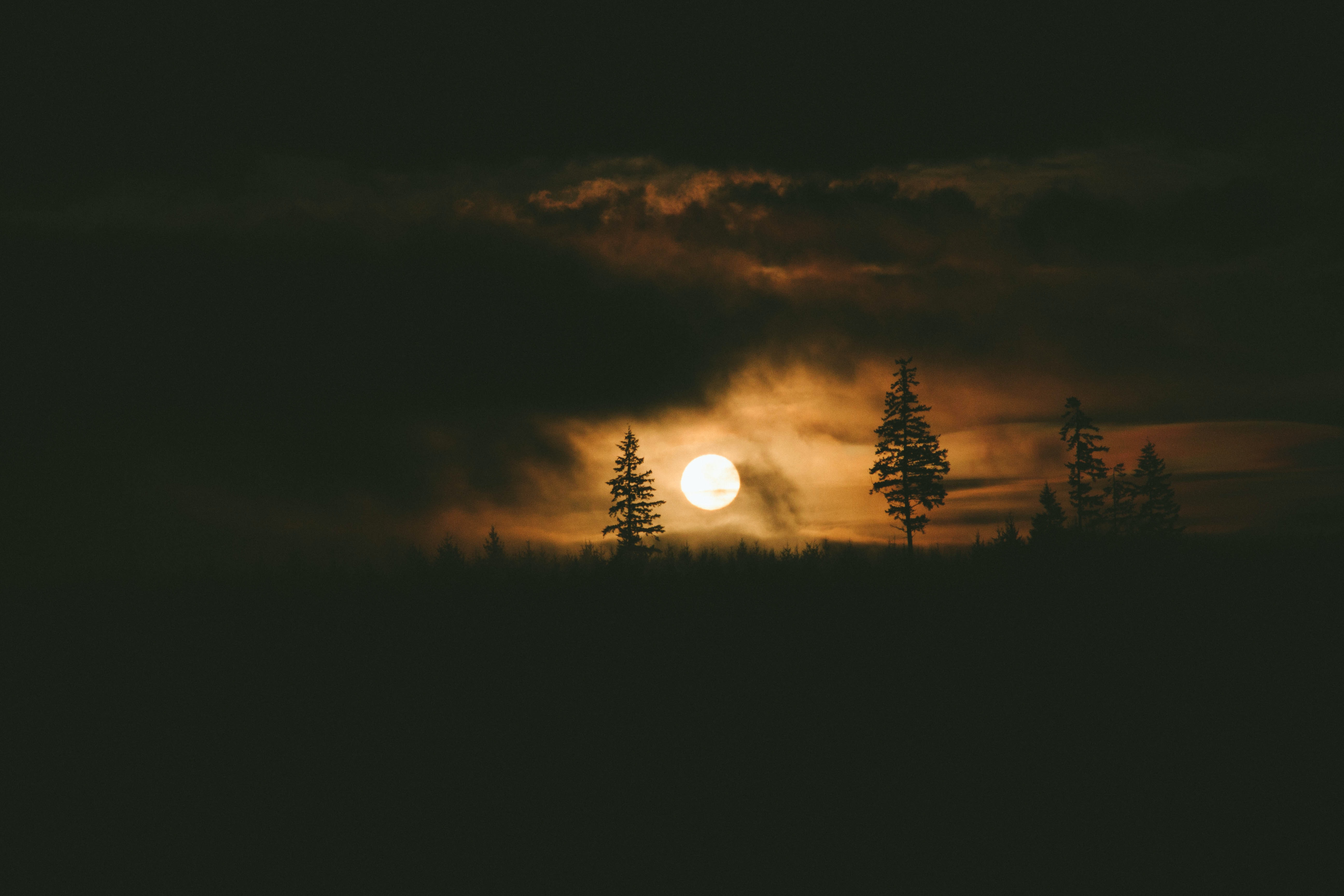 The bright golden sun as seen through silhouetted trees and clouds.
