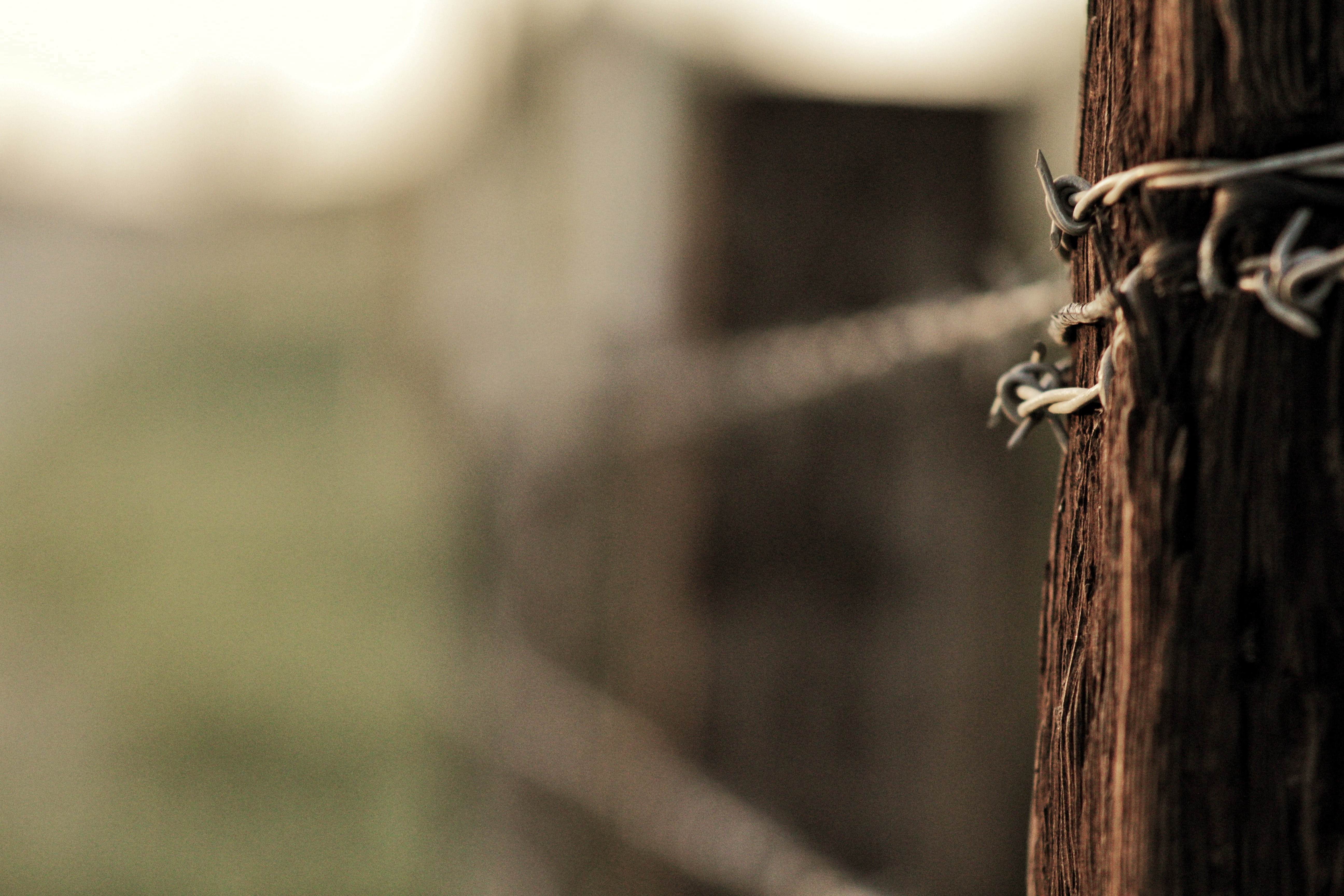Close-up of a wooden post with barbed wire attached to it