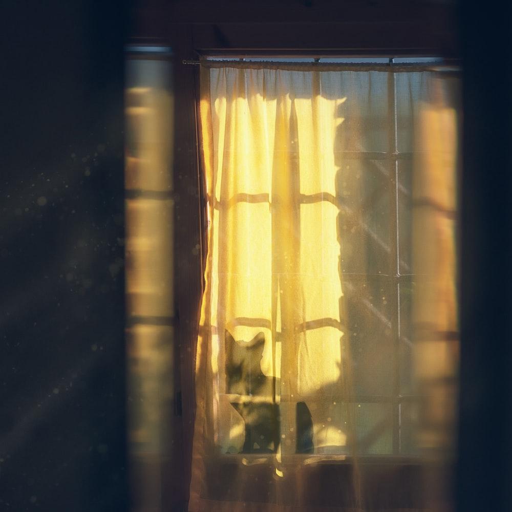 black cat on window